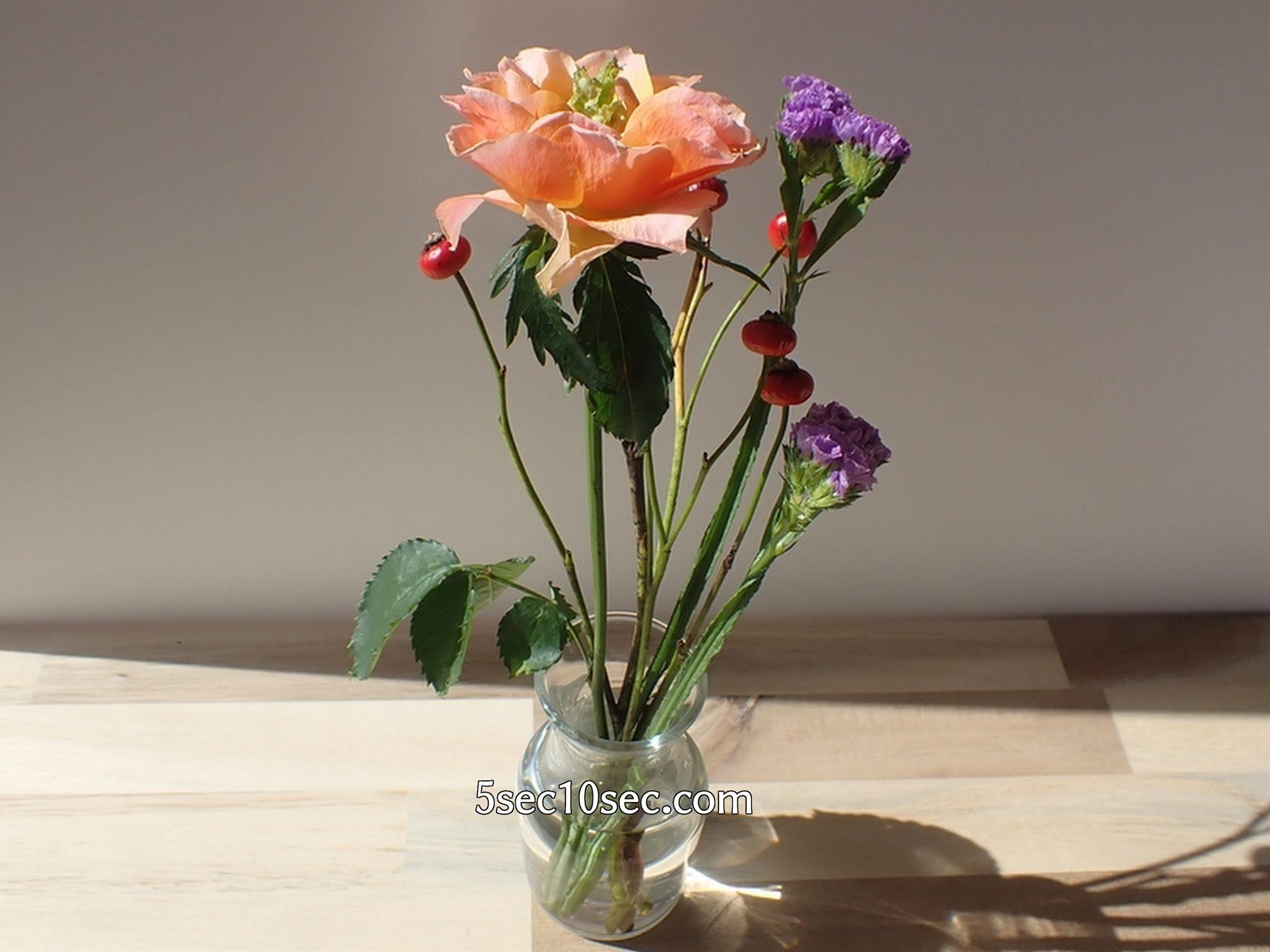 株式会社Crunch Style お花の定期便 Bloomee LIFE ブルーミーライフ 500円(税別・送料別)の体験プラン 5日経過してもまだまだ元気で良い状態です