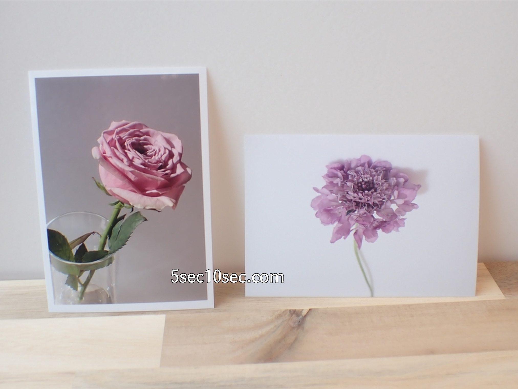 株式会社Crunch Style お花の定期便 Bloomee LIFE ブルーミーライフ レギュラープラン 切り花、生花を写真にして楽しむ、お花の楽しみ方