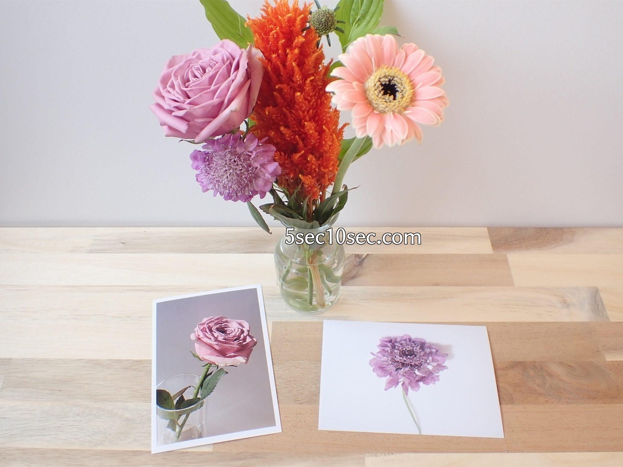 株式会社Crunch Style お花の定期便 Bloomee LIFE ブルーミーライフ レギュラープラン 切り花、生花ヲ1本ずつ写真に撮って、写真に残して、お花を楽しんでいます
