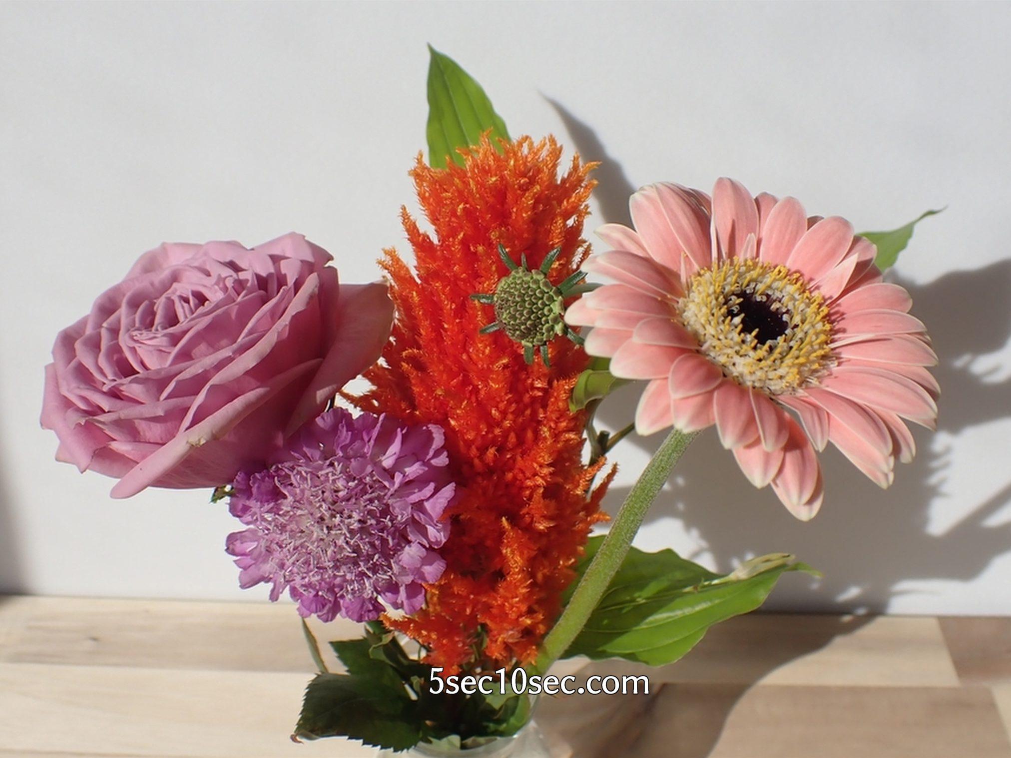 株式会社Crunch Style お花の定期便 Bloomee LIFE ブルーミーライフ レギュラープラン 初日とほとんど変わらないと思うくらい、6日目なのにお花は元気です