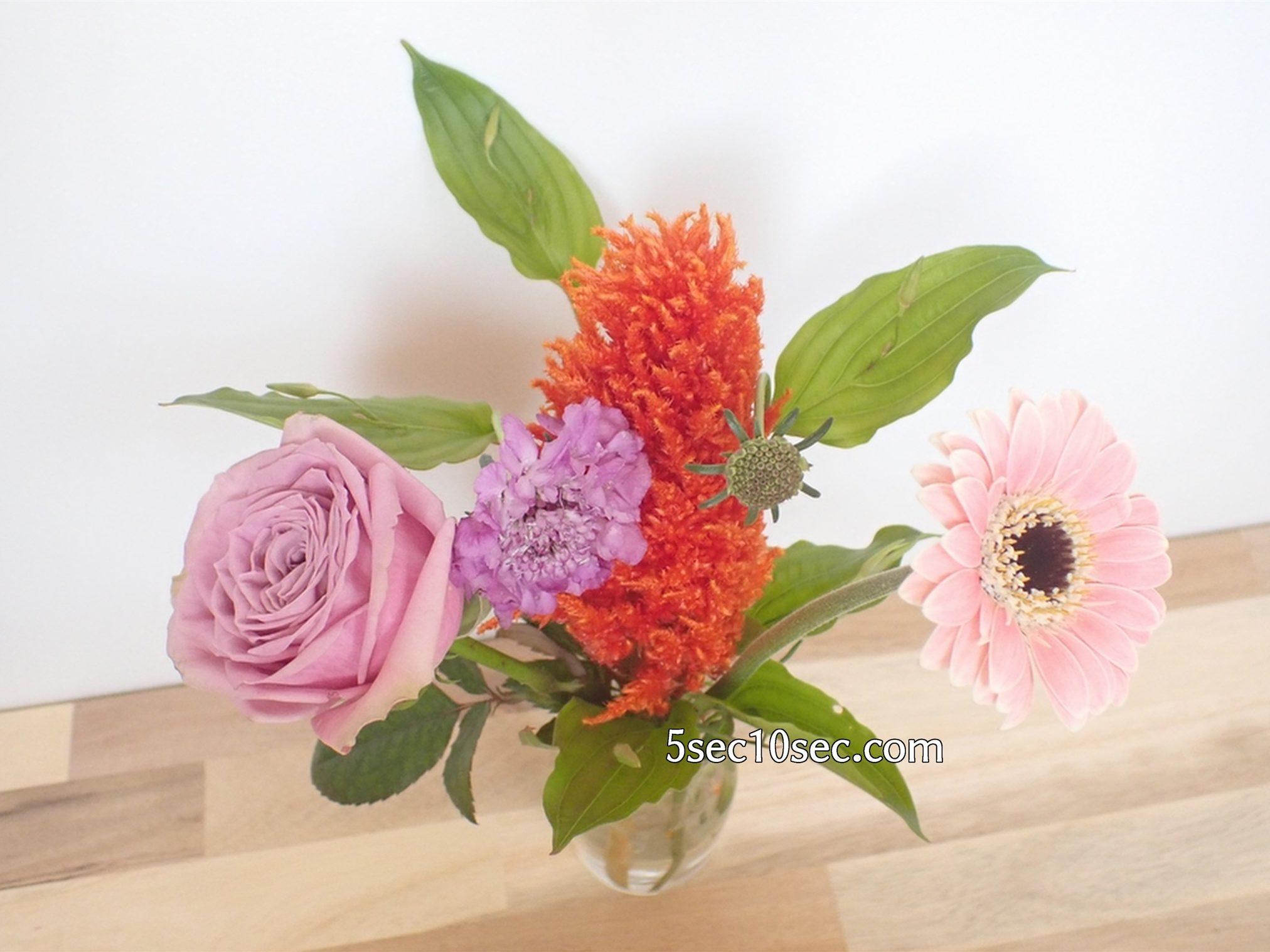 株式会社Crunch Style お花の定期便 Bloomee LIFE ブルーミーライフ レギュラープラン 届いた翌日、2日目のお花の状態です