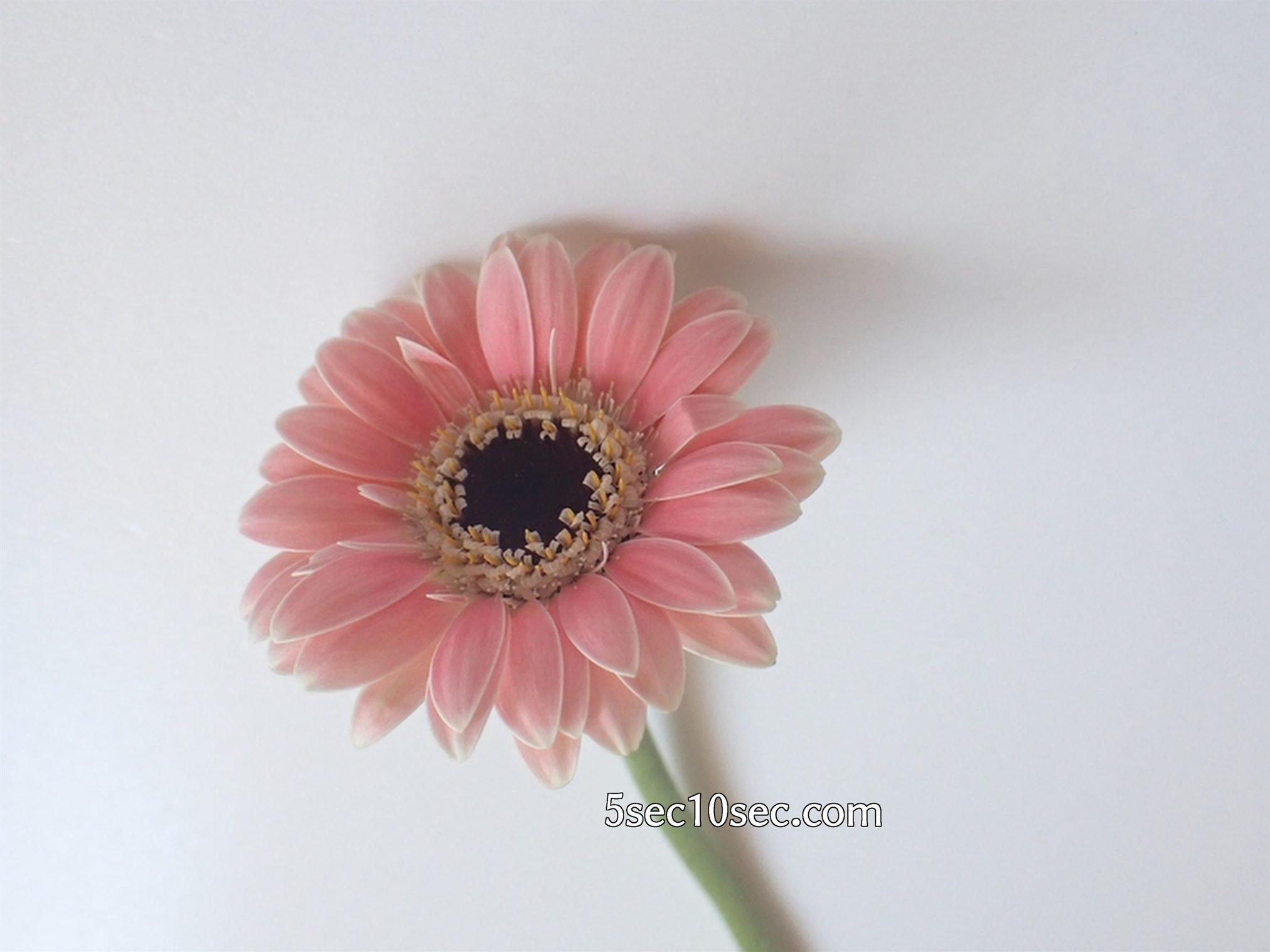 株式会社Crunch Style お花の定期便 Bloomee LIFE ブルーミーライフ レギュラープラン デジタルコンテンツ、web素材にするために1本1本個別にお花の写真を撮る