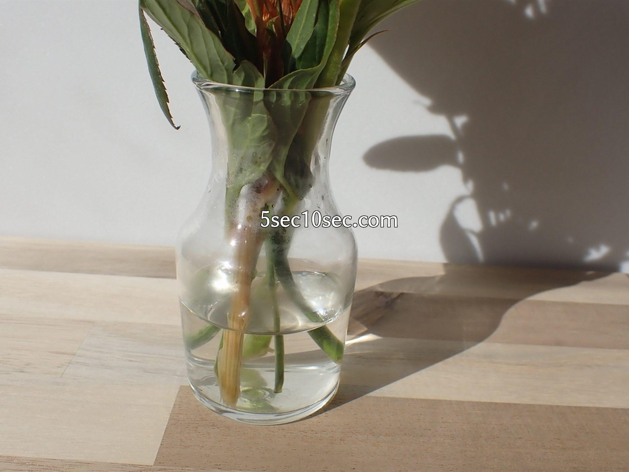 株式会社Crunch Style お花の定期便 Bloomee LIFE ブルーミーライフ レギュラープラン 届いてから6日目、初日と比べて、お水が半分以下に減っていました
