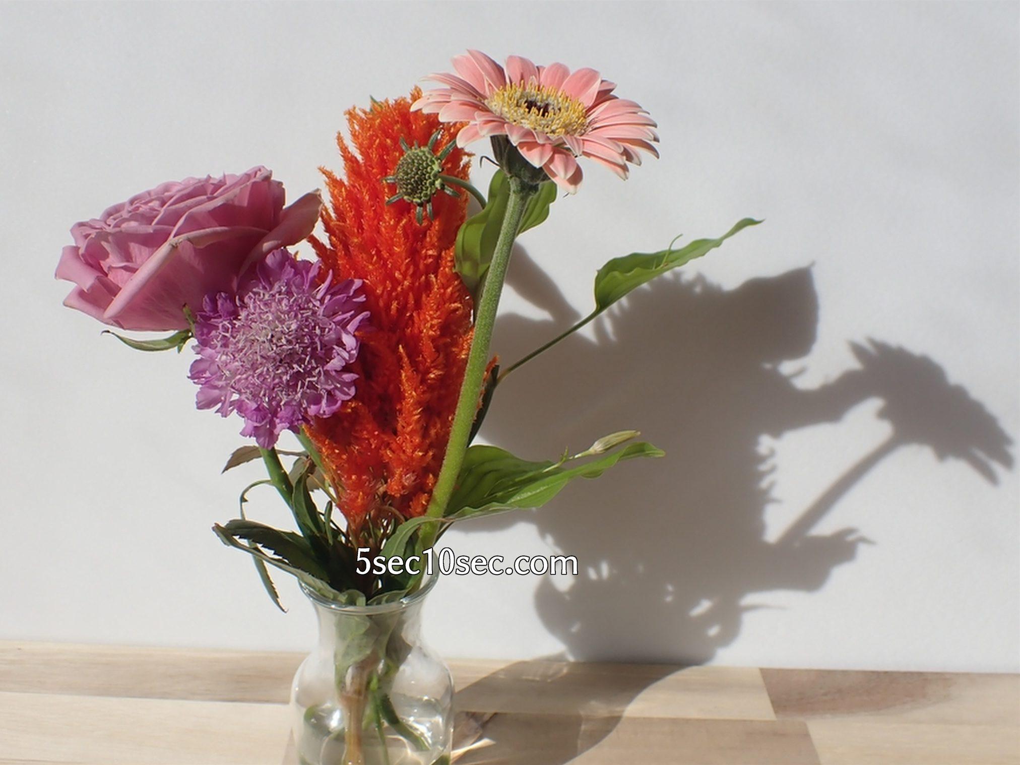 株式会社Crunch Style お花の定期便 Bloomee LIFE ブルーミーライフ レギュラープラン 届いてから6日目 お花はまだまだ元気です