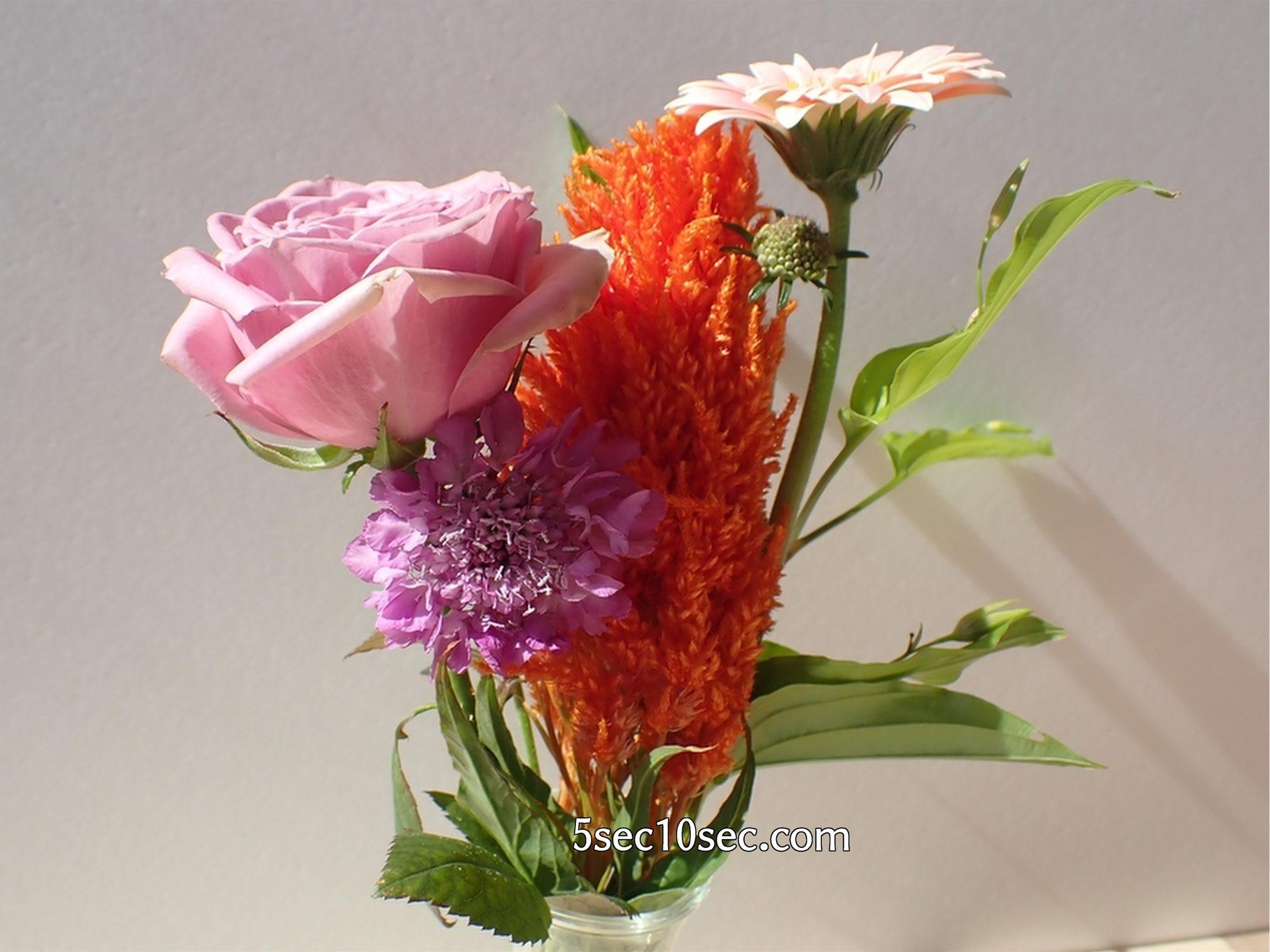 株式会社Crunch Style お花の定期便 Bloomee LIFE ブルーミーライフ レギュラープラン 2日目以上に届いてから3日目のほうが切り花が元気になっていく印象でした