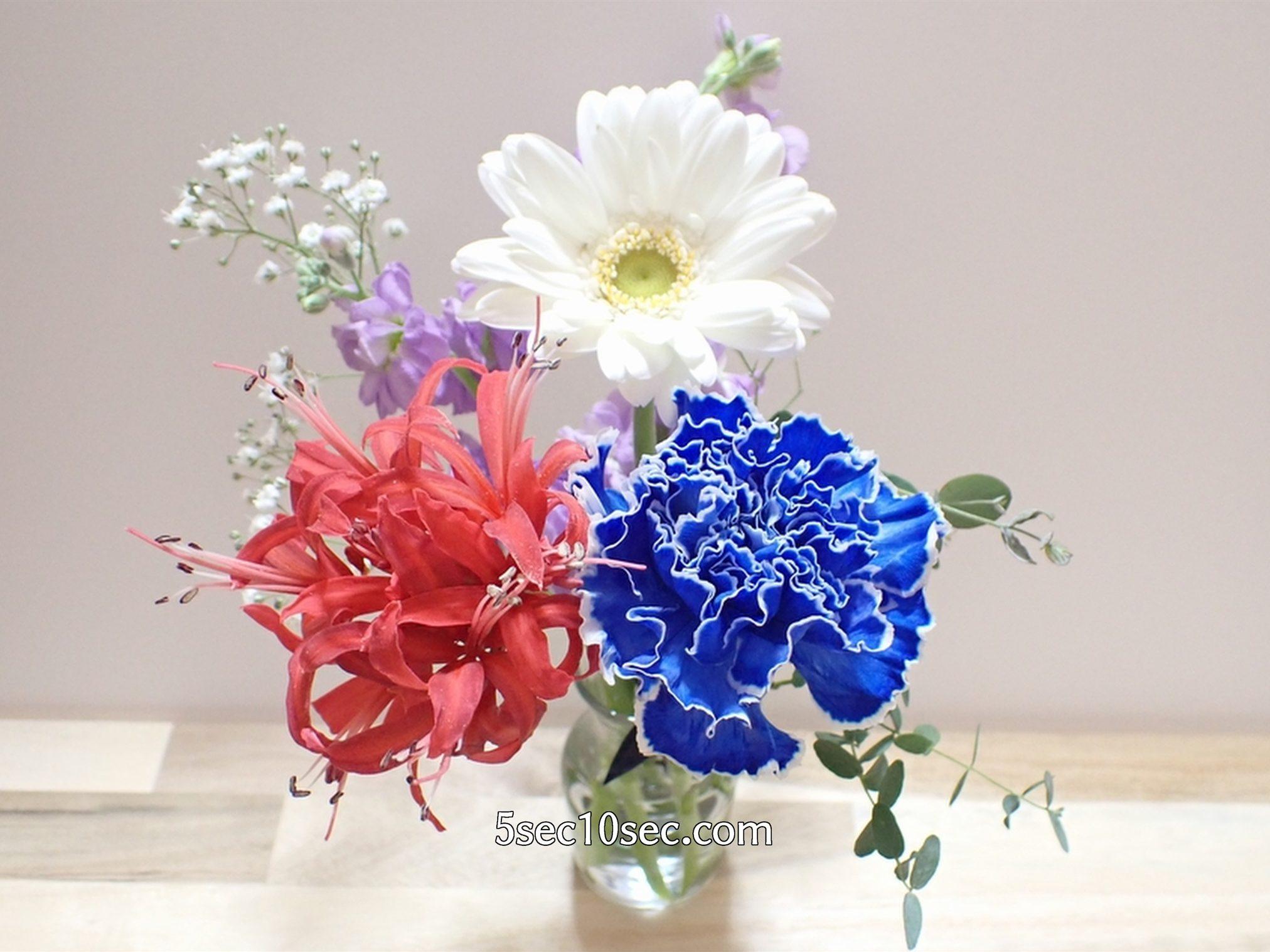 株式会社Crunch Style お花の定期便 Bloomee LIFE ブルーミーライフ 800円のレギュラープラン 届いた日、1日目のお花の状態