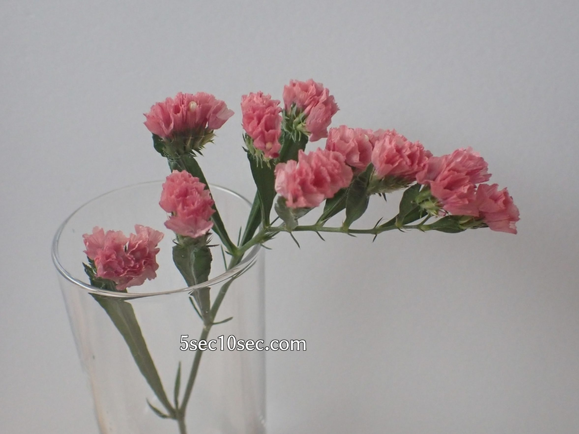 株式会社Crunch Style お花の定期便 Bloomee LIFE ブルーミーライフ レギュラープラン スターチス
