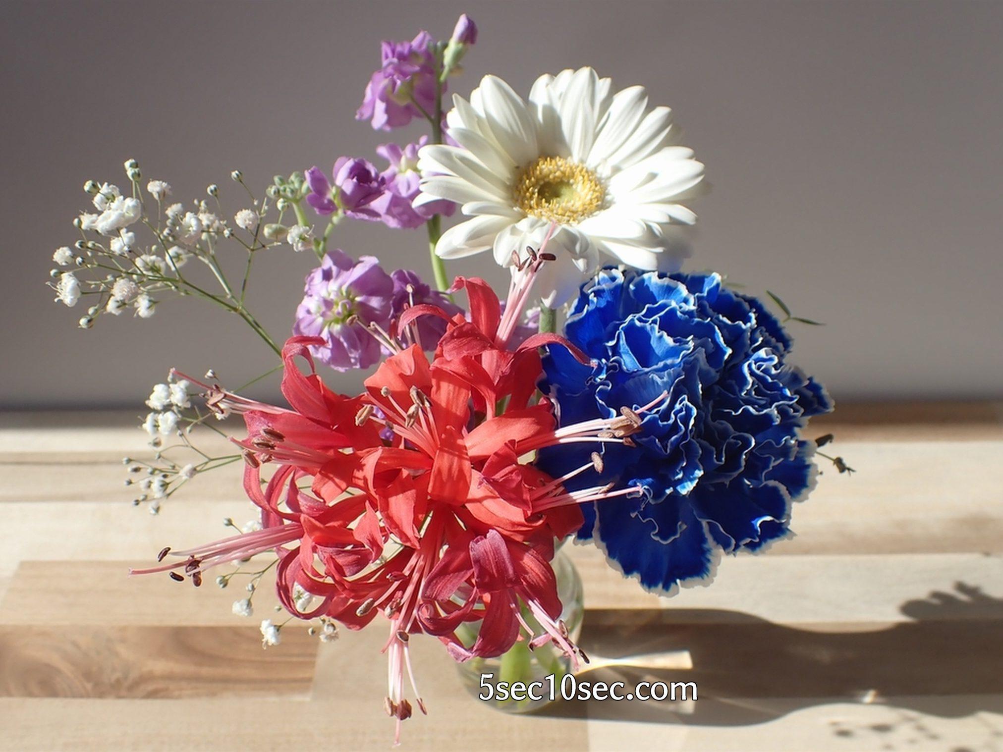 株式会社Crunch Style お花の定期便 Bloomee LIFE ブルーミーライフ 届いてから10日目の経過写真、基本のお手入れをしていれば長持ちするので初心者でも楽しめました