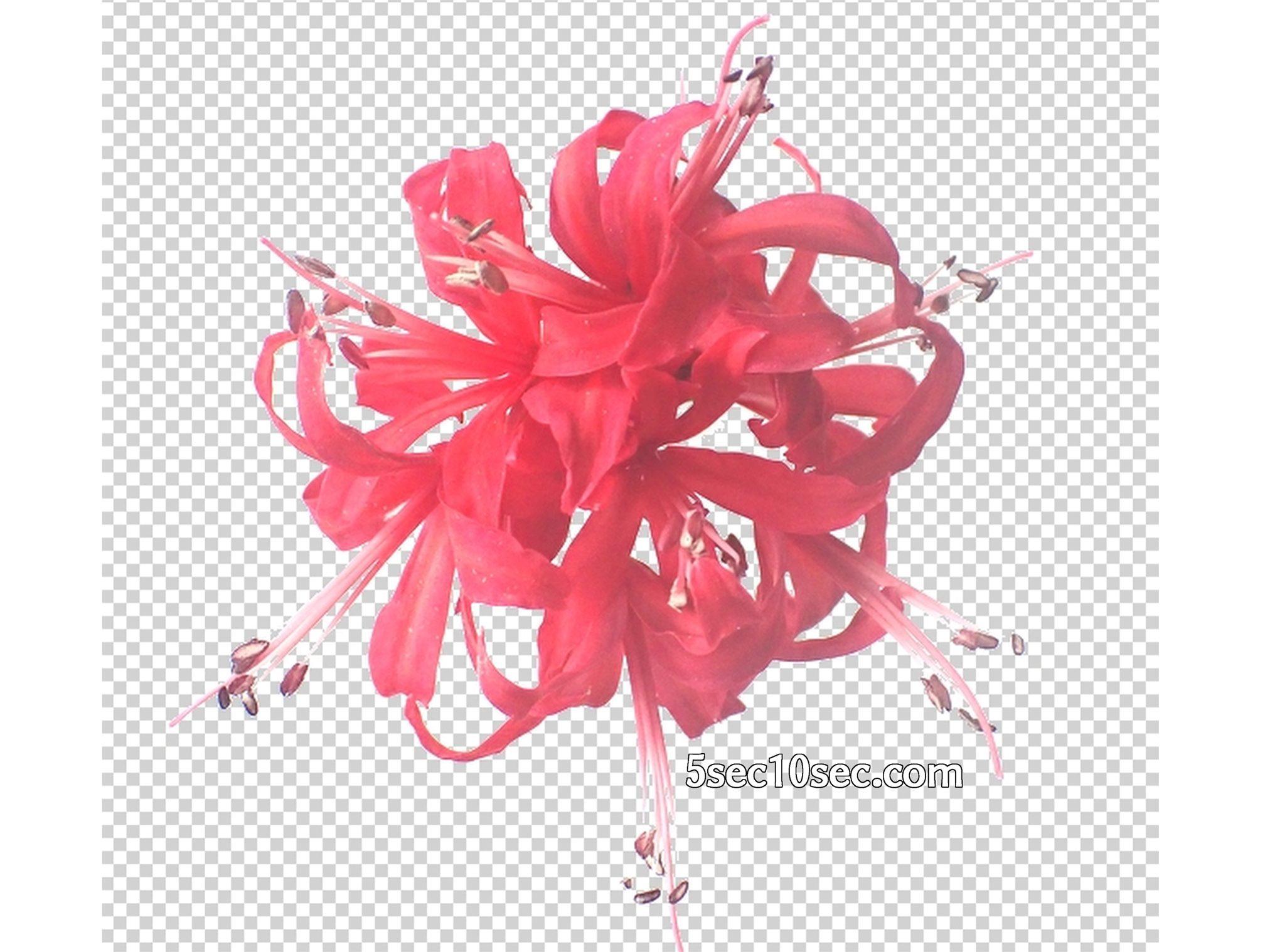 株式会社Crunch Style お花の定期便 Bloomee LIFE ブルーミーライフ 800円のレギュラープラン コントラストや明るさを上げると、写真を簡単に透明化できます、png形式で保存します