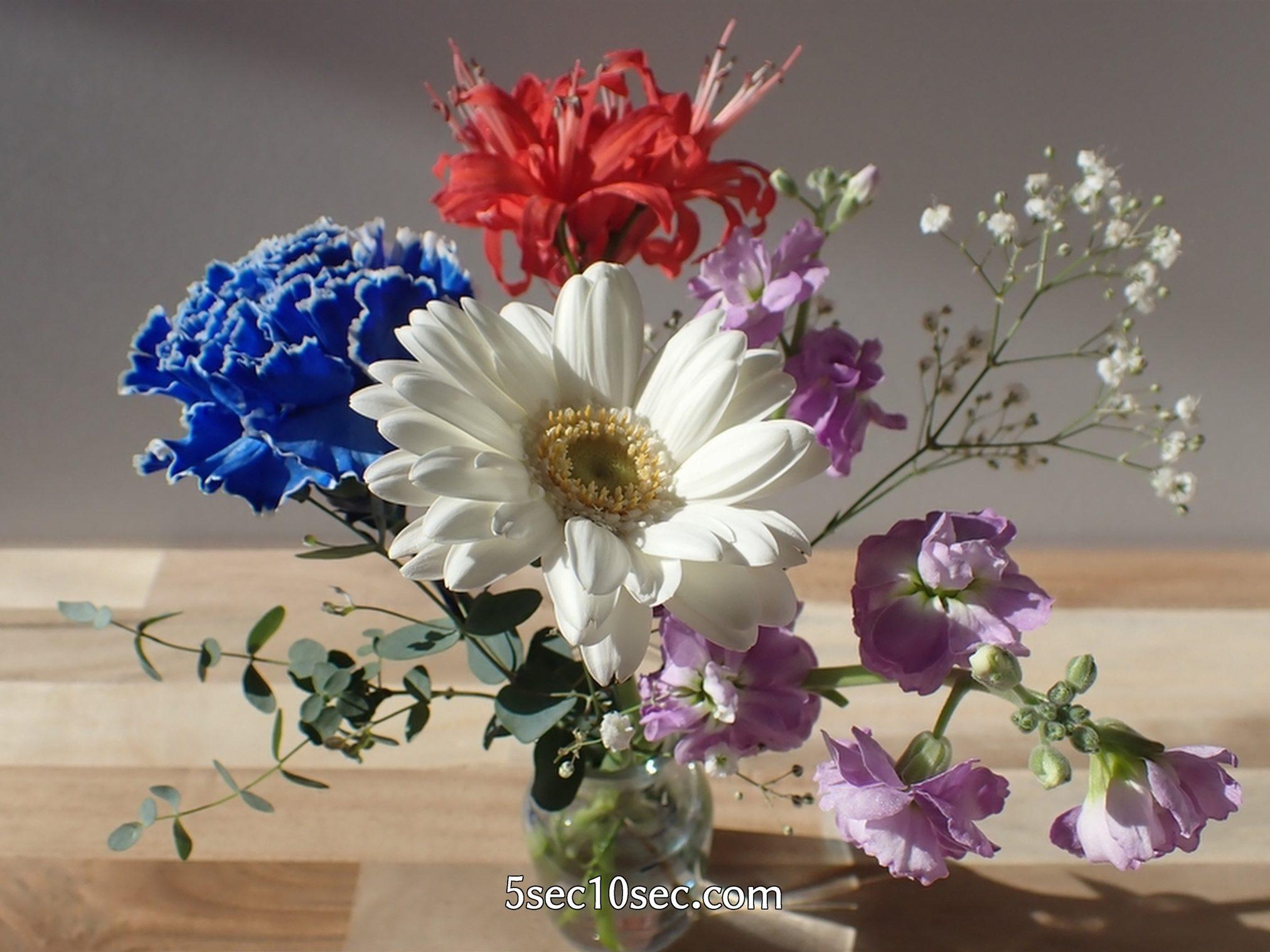 株式会社Crunch Style お花の定期便 Bloomee LIFE ブルーミーライフ 800円のレギュラープラン 立体的で色んな角度から楽しめます