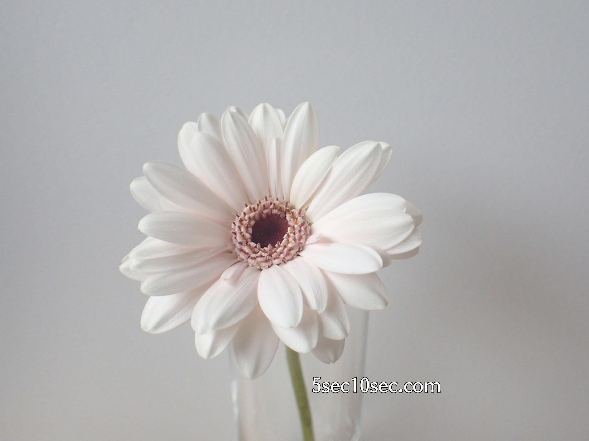 株式会社Crunch Style お花の定期便 Bloomee LIFE ブルーミーライフ レギュラープラン ガーベラ ココット