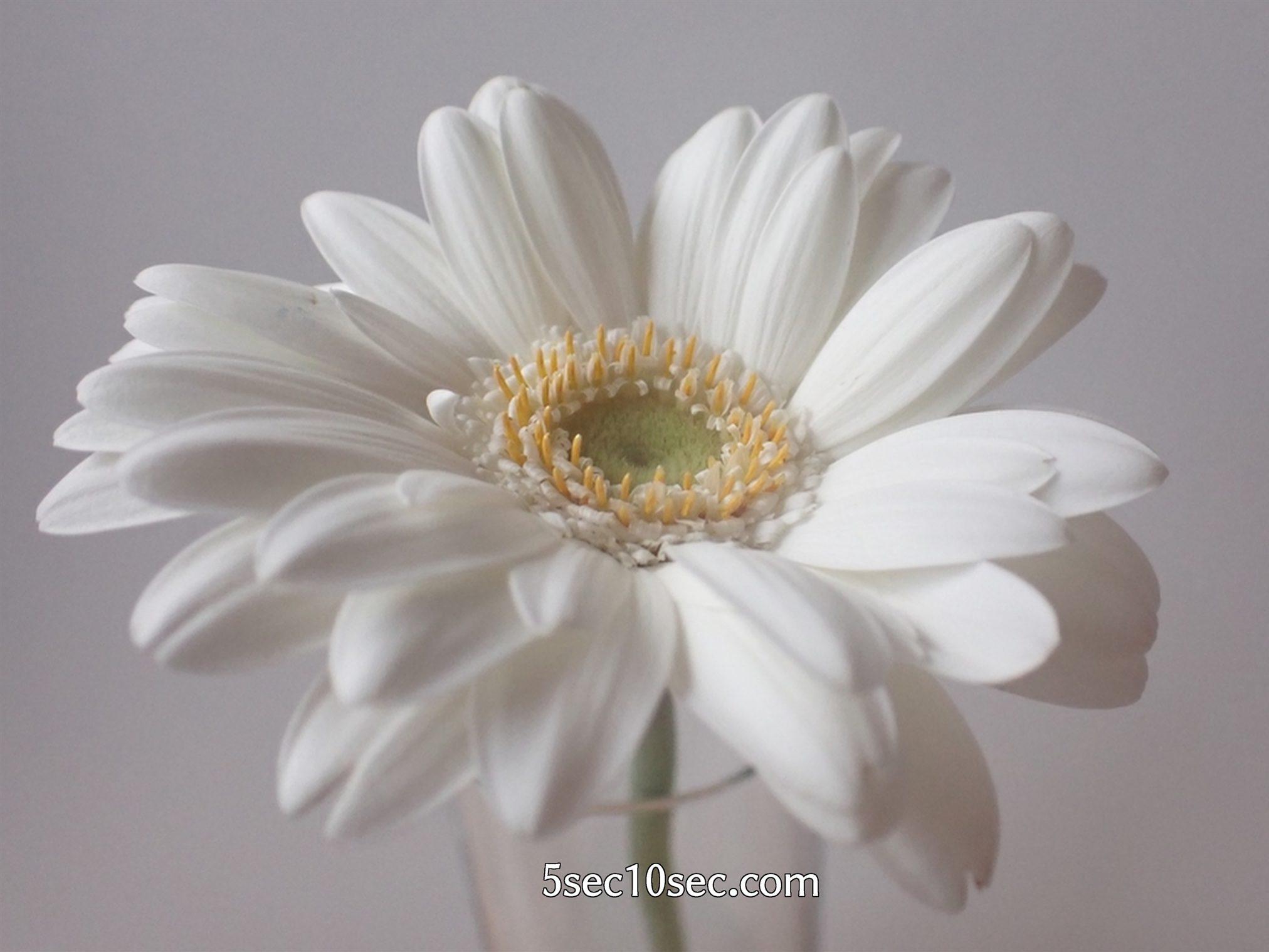 株式会社Crunch Style お花の定期便 Bloomee LIFE ブルーミーライフ 800円のレギュラープラン ガーベラの写真