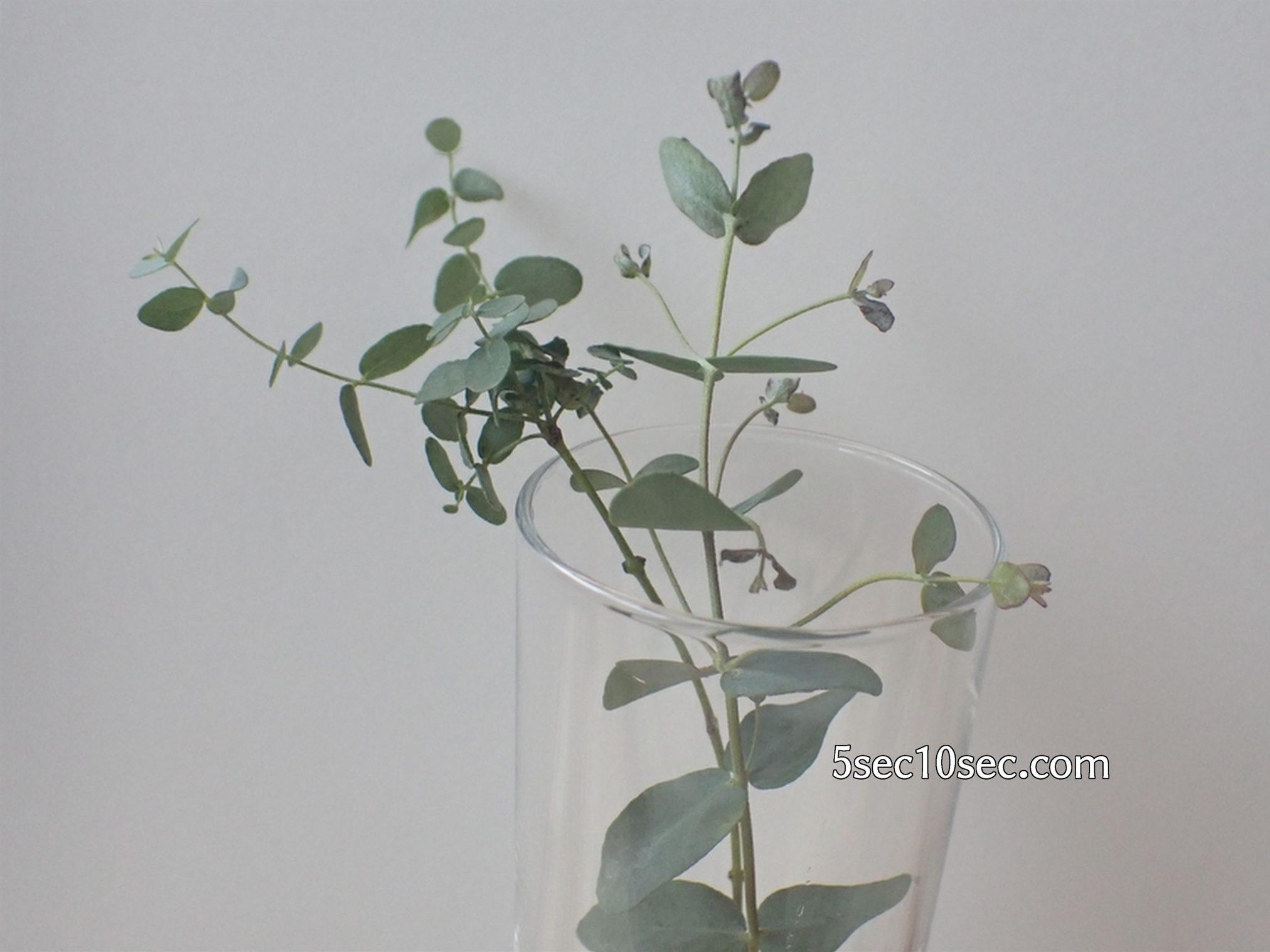株式会社Crunch Style お花の定期便 Bloomee LIFE ブルーミーライフ 800円のレギュラープラン グニユーカリを1輪挿しにするとこういう感じです