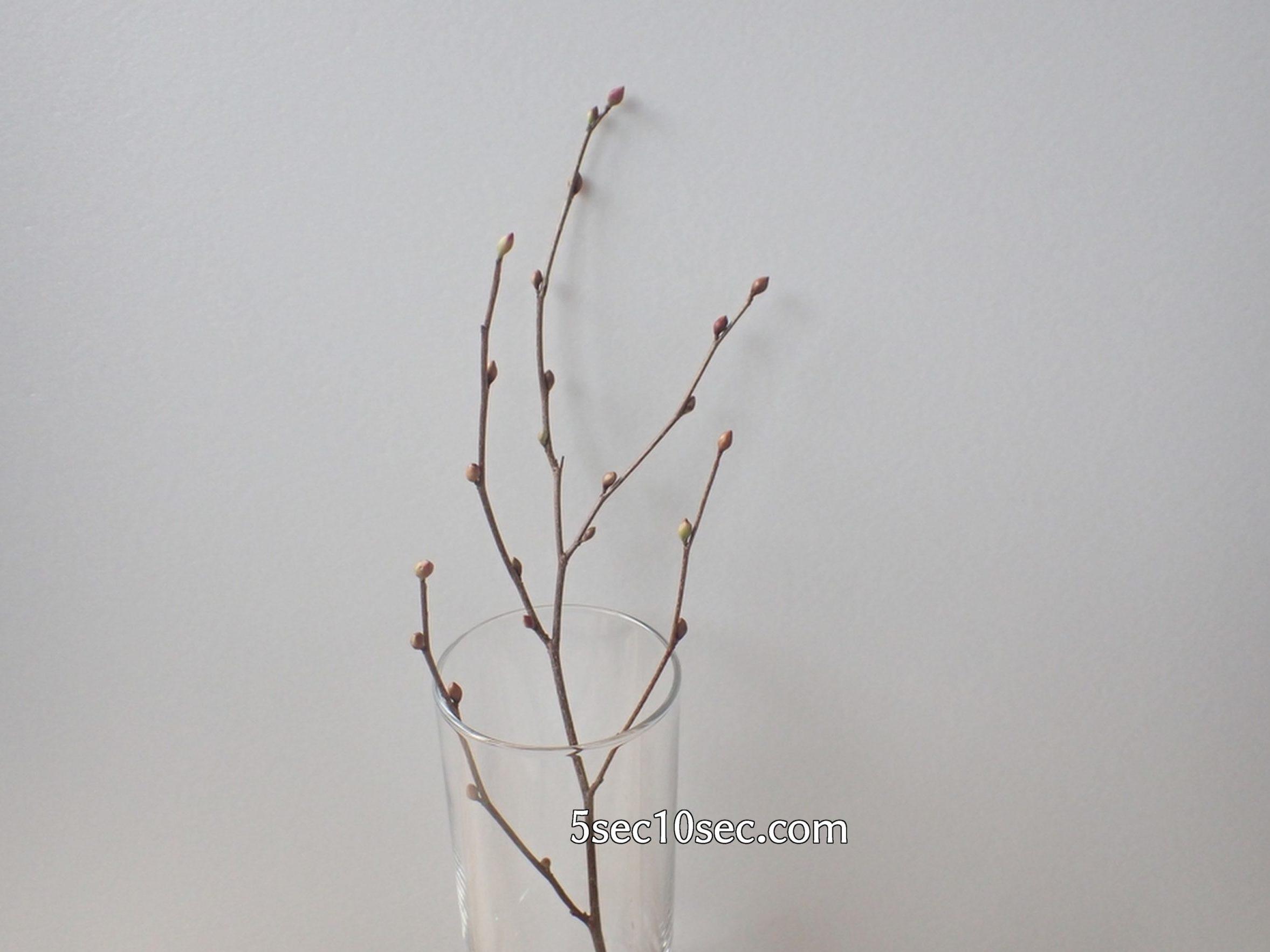 株式会社Crunch Style お花の定期便 Bloomee LIFE ブルーミーライフ レギュラープラン 姫水木