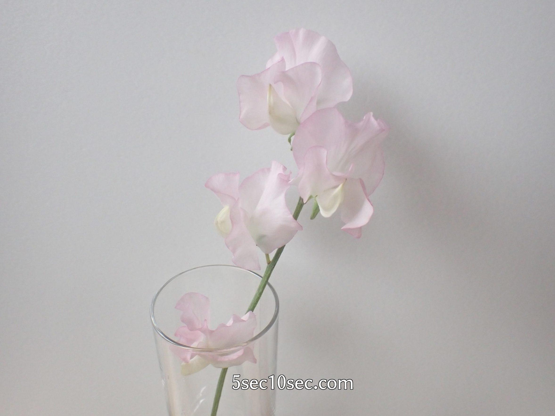 株式会社Crunch Style お花の定期便 Bloomee LIFE ブルーミーライフ レギュラープラン スイトピー