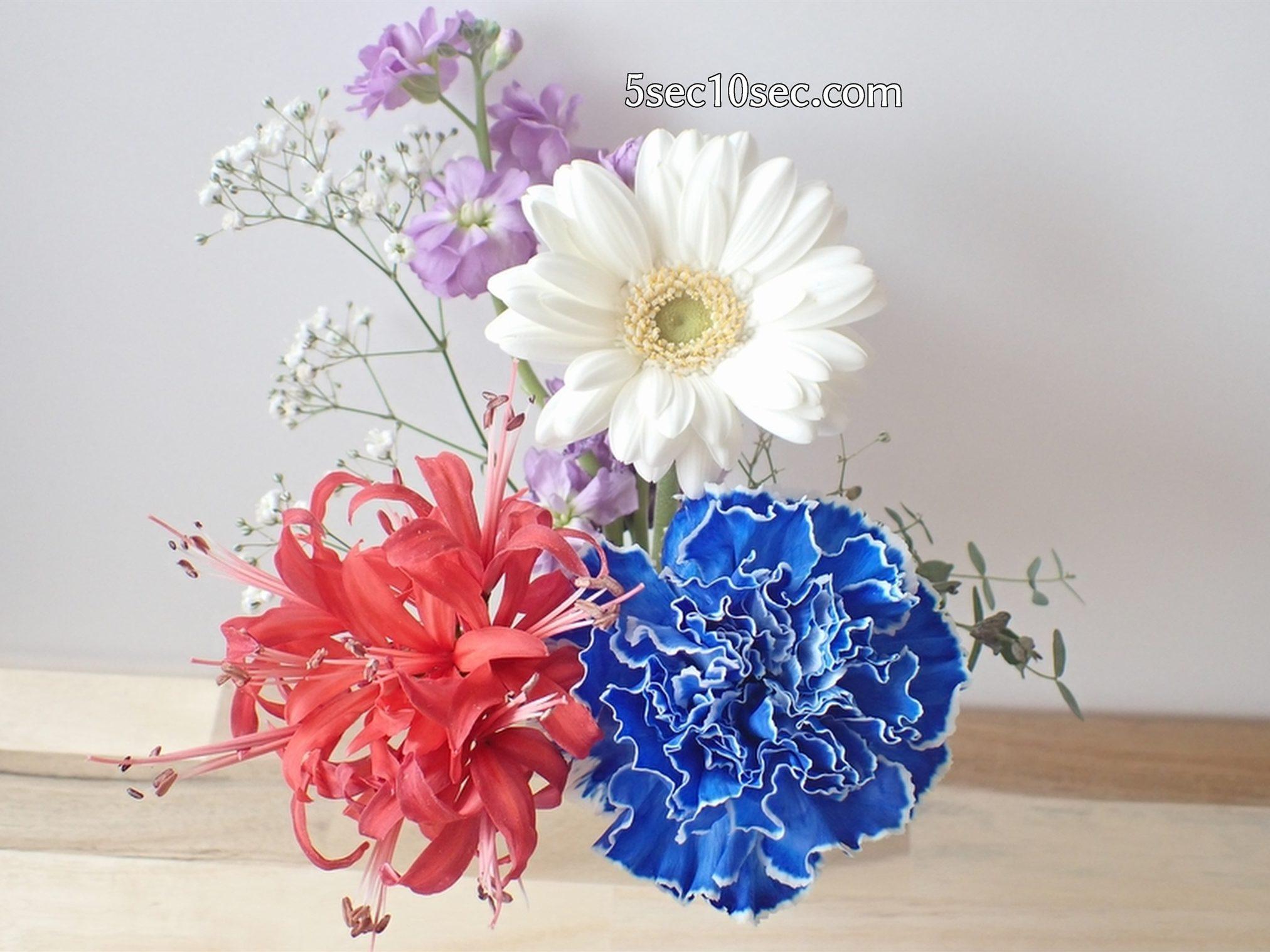 株式会社Crunch Style お花の定期便 Bloomee LIFE ブルーミーライフ 3回目の届いたお花の6日目の写真、まだまだ綺麗です