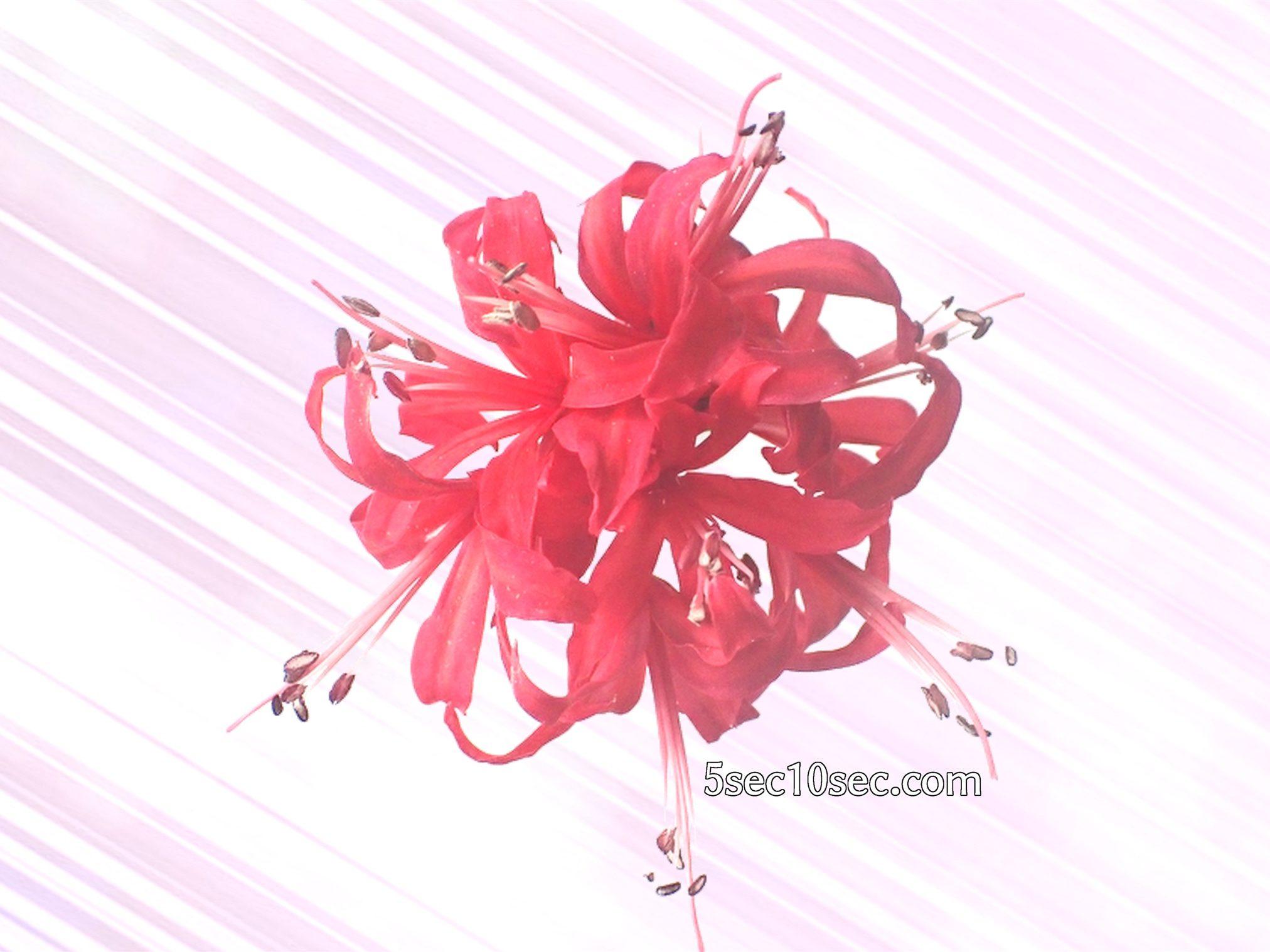 株式会社Crunch Style お花の定期便 Bloomee LIFE ブルーミーライフ 800円のレギュラープラン 透明化したお花の写真を素材として使う