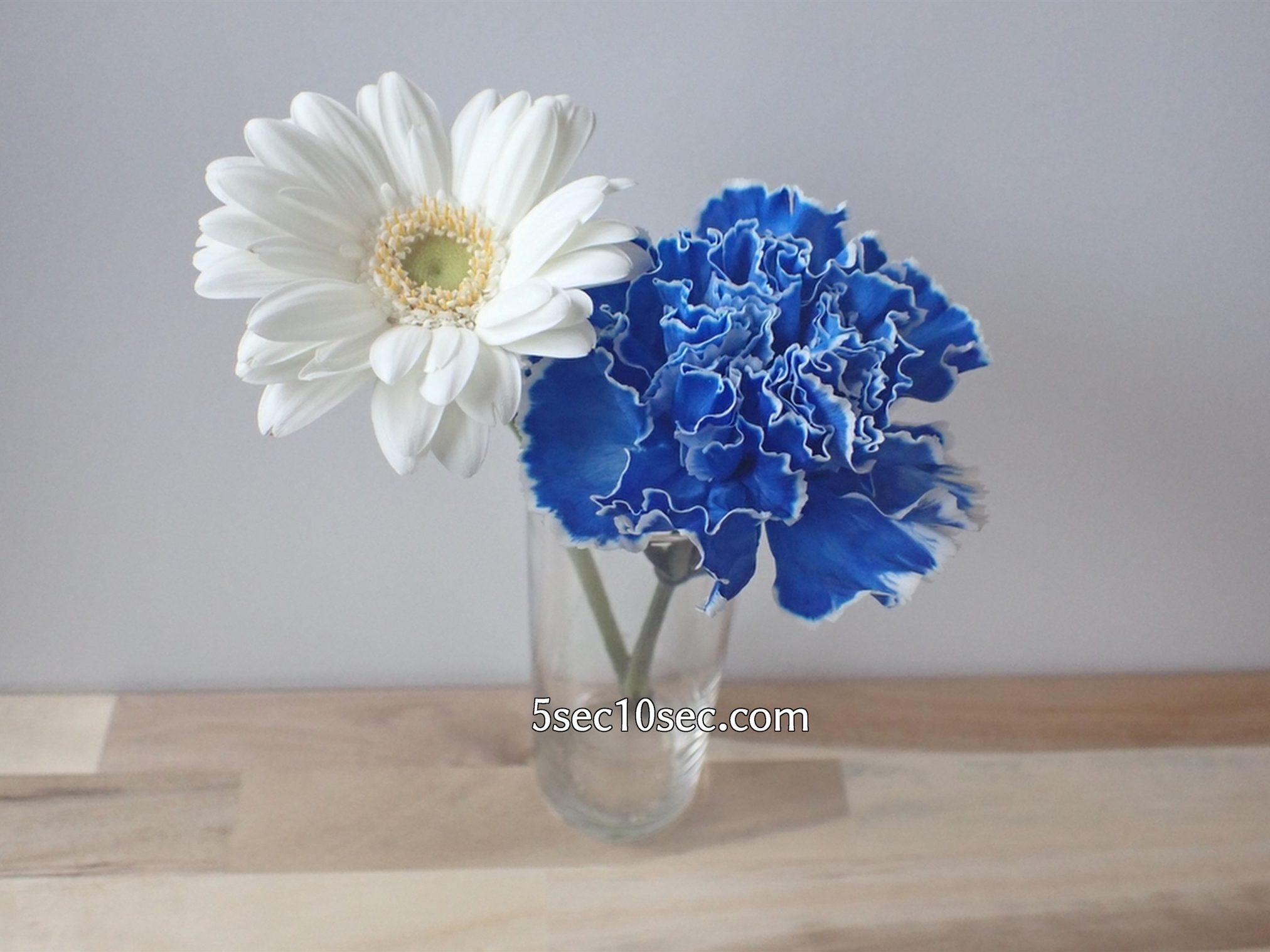 株式会社Crunch Style お花の定期便 Bloomee LIFE ブルーミーライフ 800円のレギュラープラン 届いたお花を全部一緒に生けずに、自分で組み合わせて花瓶に入れても素敵