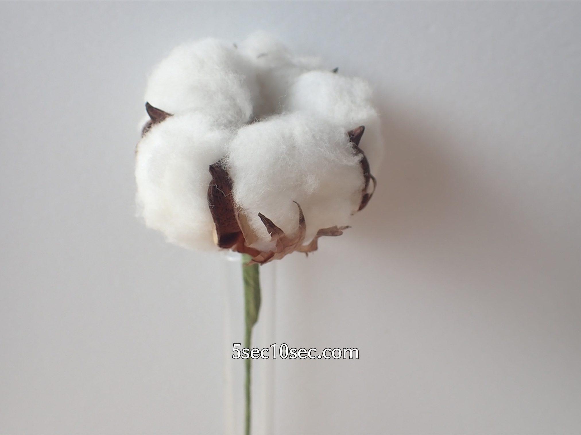 株式会社Crunch Style お花の定期便 Bloomee LIFE ブルーミーライフ コットンフラワーの写真