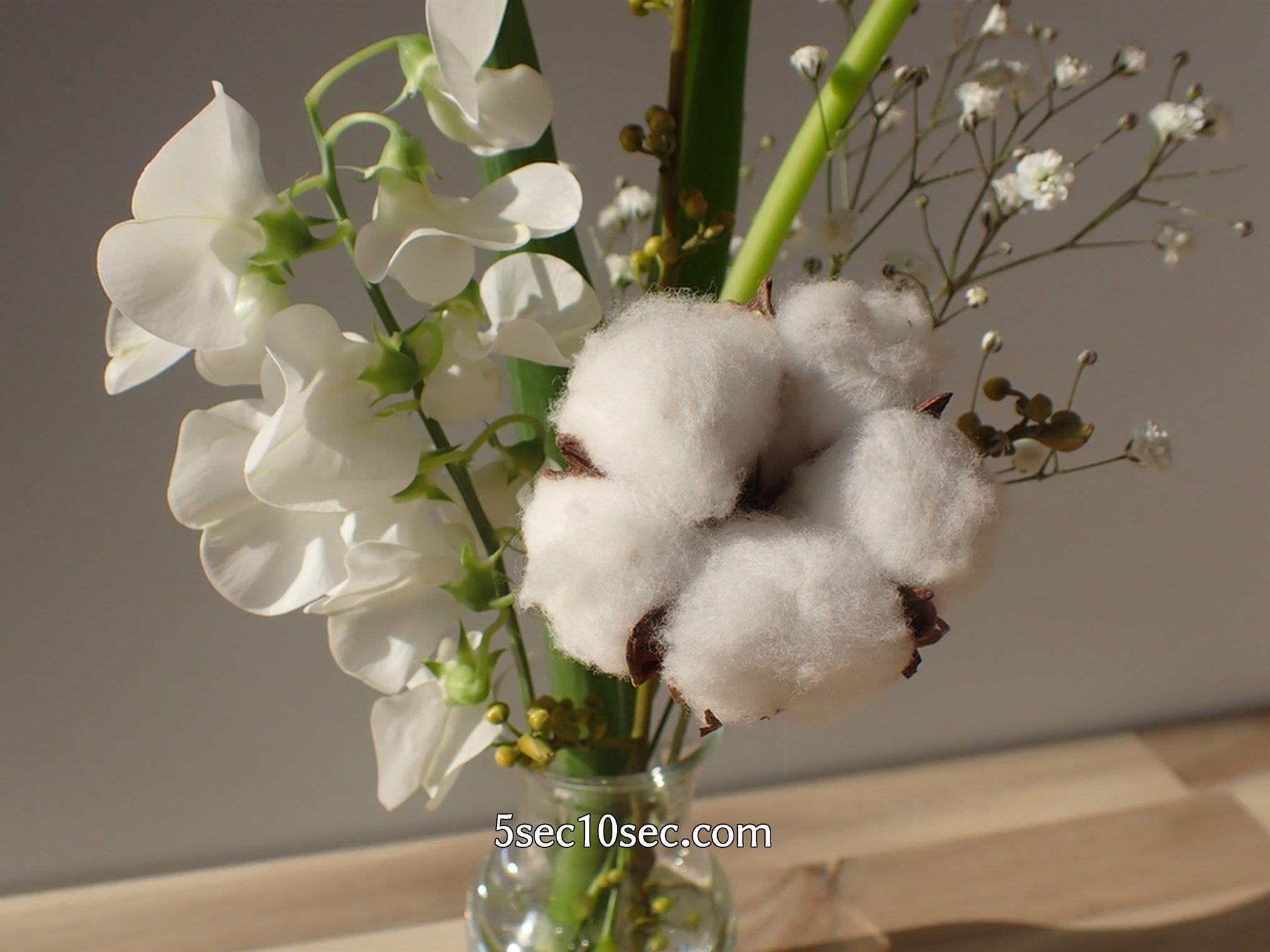 株式会社Crunch Style お花の定期便 Bloomee LIFE ブルーミーライフ 6日目、コットンフラワーがふわふわと可愛い