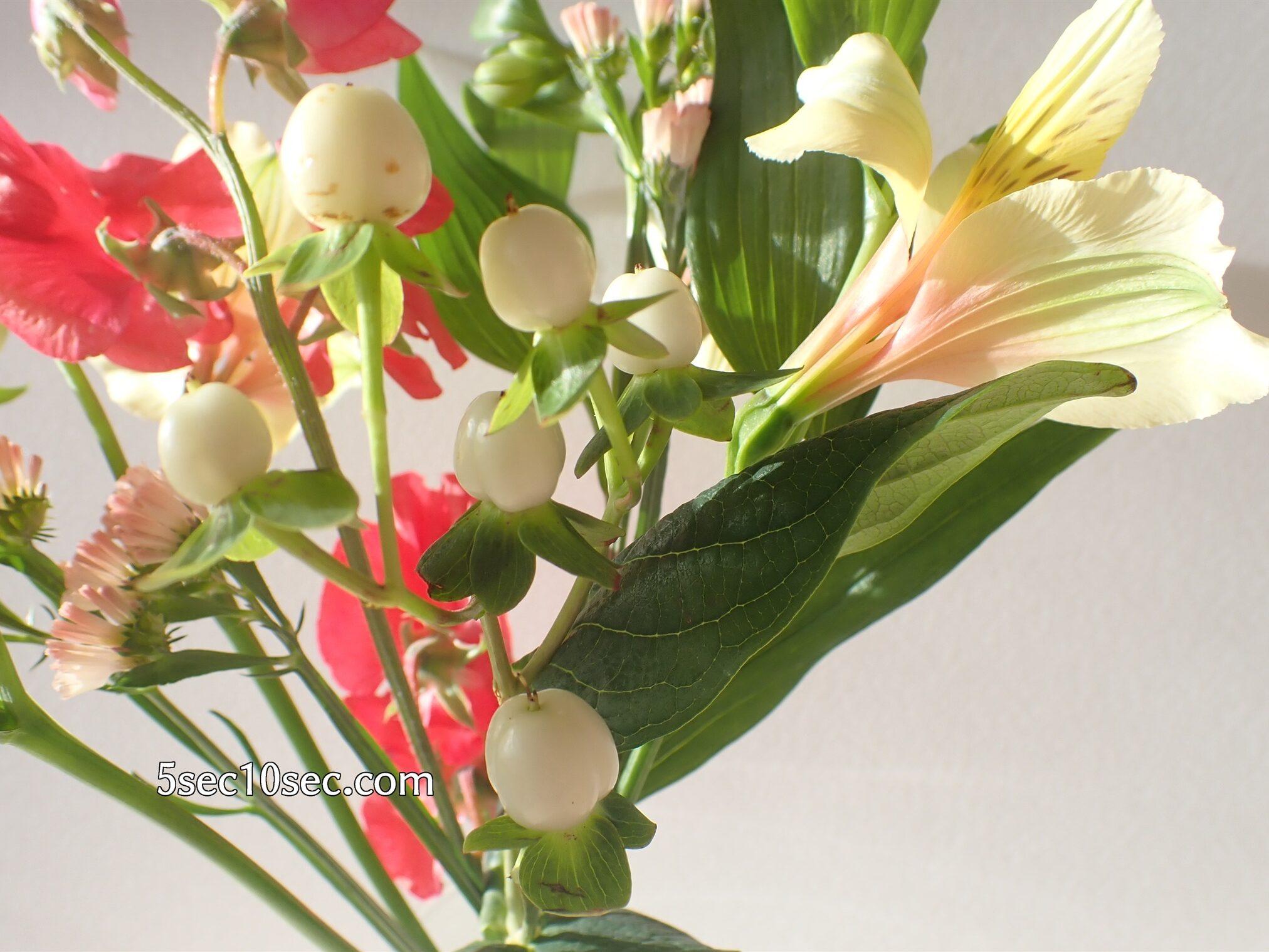 Bloomee LIFE(ブルーミーライフ)レギュラープラン ヒペリカム ココウノを入れたお花のアレンジ