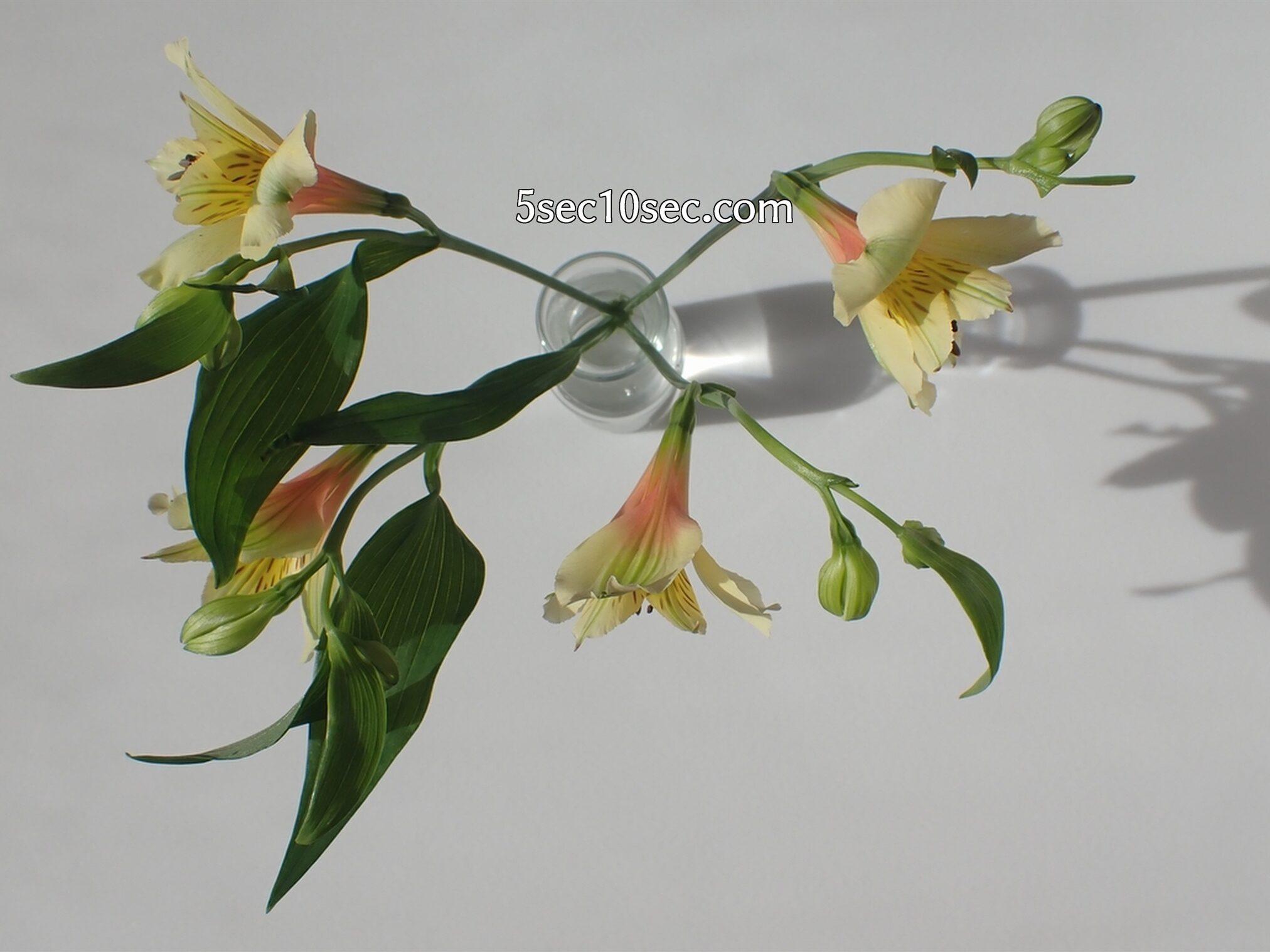 株式会社Crunch Style Bloomee LIFE(ブルーミーライフ)レギュラープラン アルストロメリアの茎がパーテーションの役割をして、花瓶に生けやすい