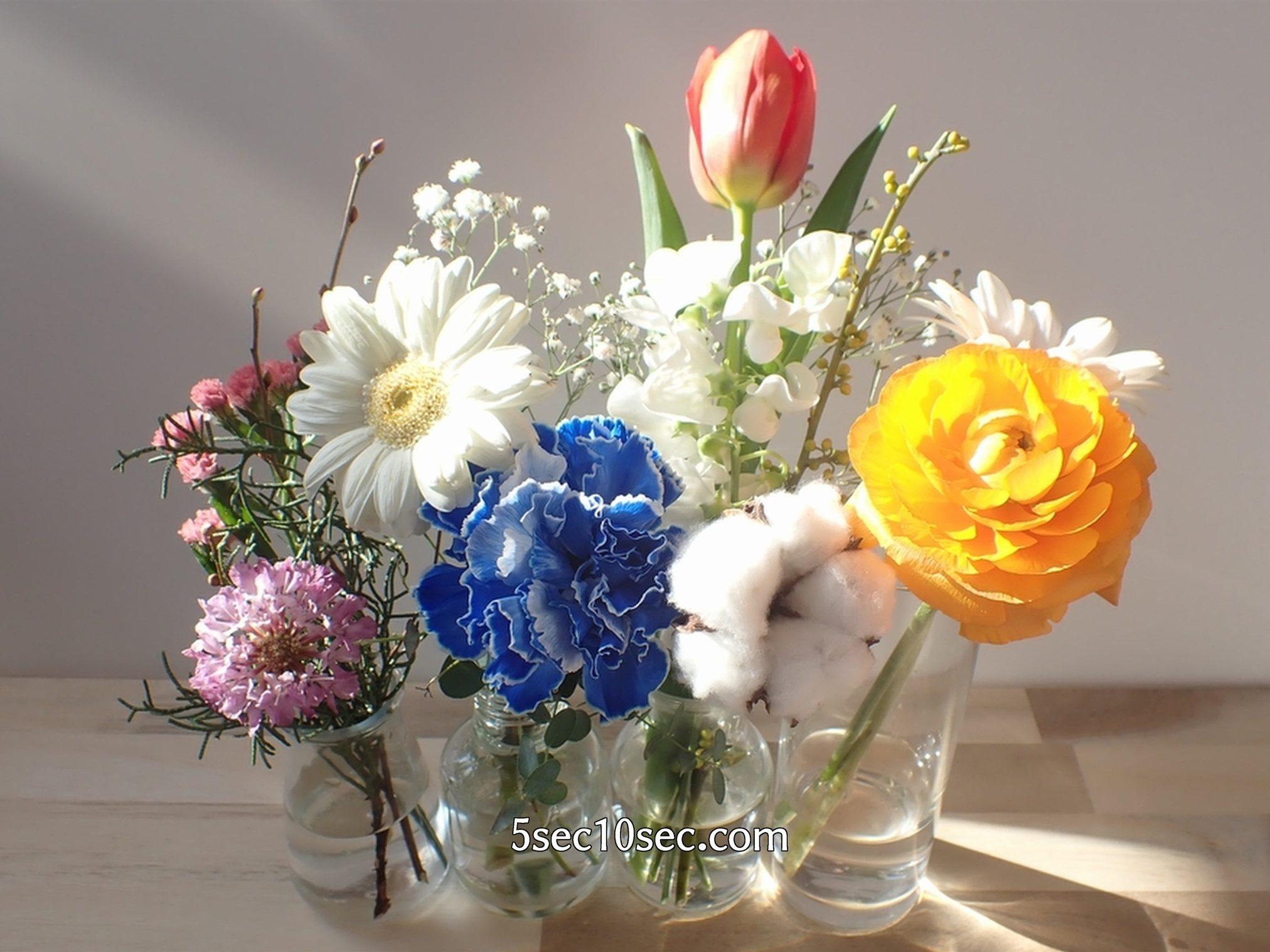 株式会社Crunch Style お花の定期便 Bloomee LIFE ブルーミーライフ 蕾から2ヵ月で咲いたスカビオサを他のお花と一緒に飾ってみた
