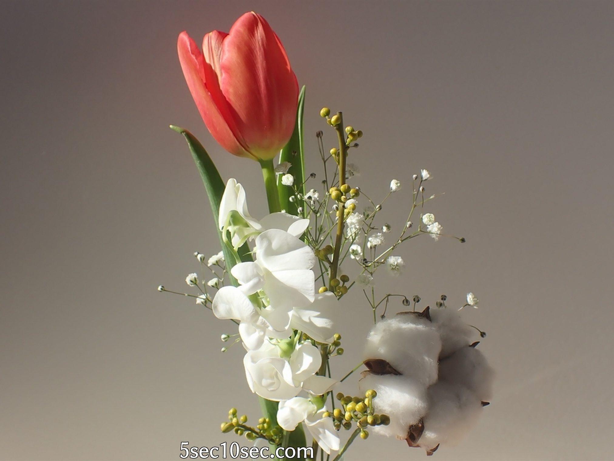 株式会社Crunch Style お花の定期便 Bloomee LIFE ブルーミーライフ チョーリップは変化を楽しめるお花