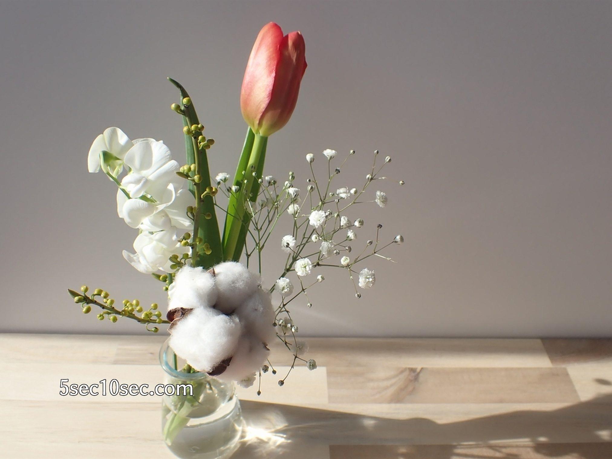 株式会社Crunch Style お花の定期便 Bloomee LIFE ブルーミーライフ チューリップは温度や明るさで動いたり蕾を開いたり変化します