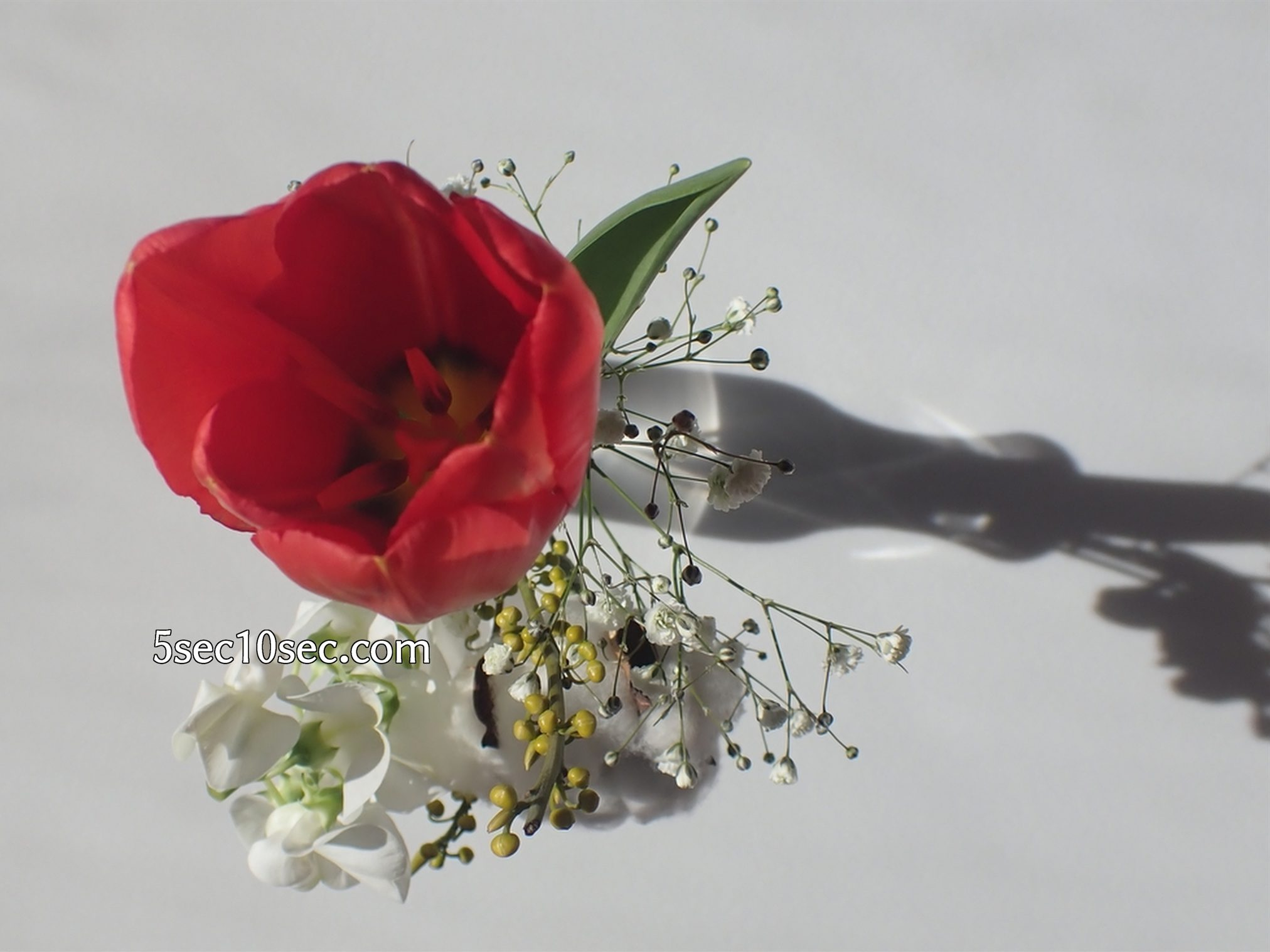 株式会社Crunch Style お花の定期便 Bloomee LIFE ブルーミーライフ 暖かい温度と太陽光の明るさで、チューリップの蕾が少し開きました