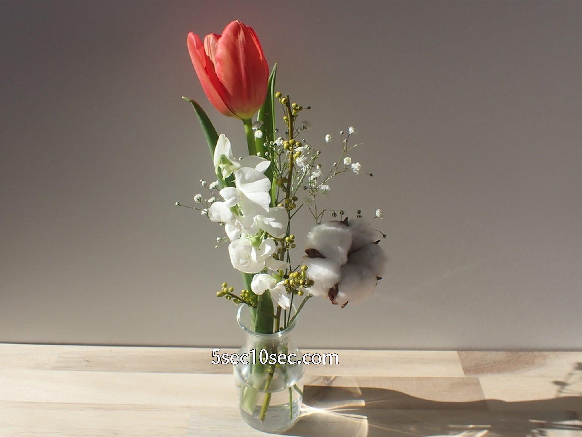 株式会社Crunch Style お花の定期便 Bloomee LIFE ブルーミーライフ 温かさ、温度、明るさに反応して、チューリップのつぼみが開きました