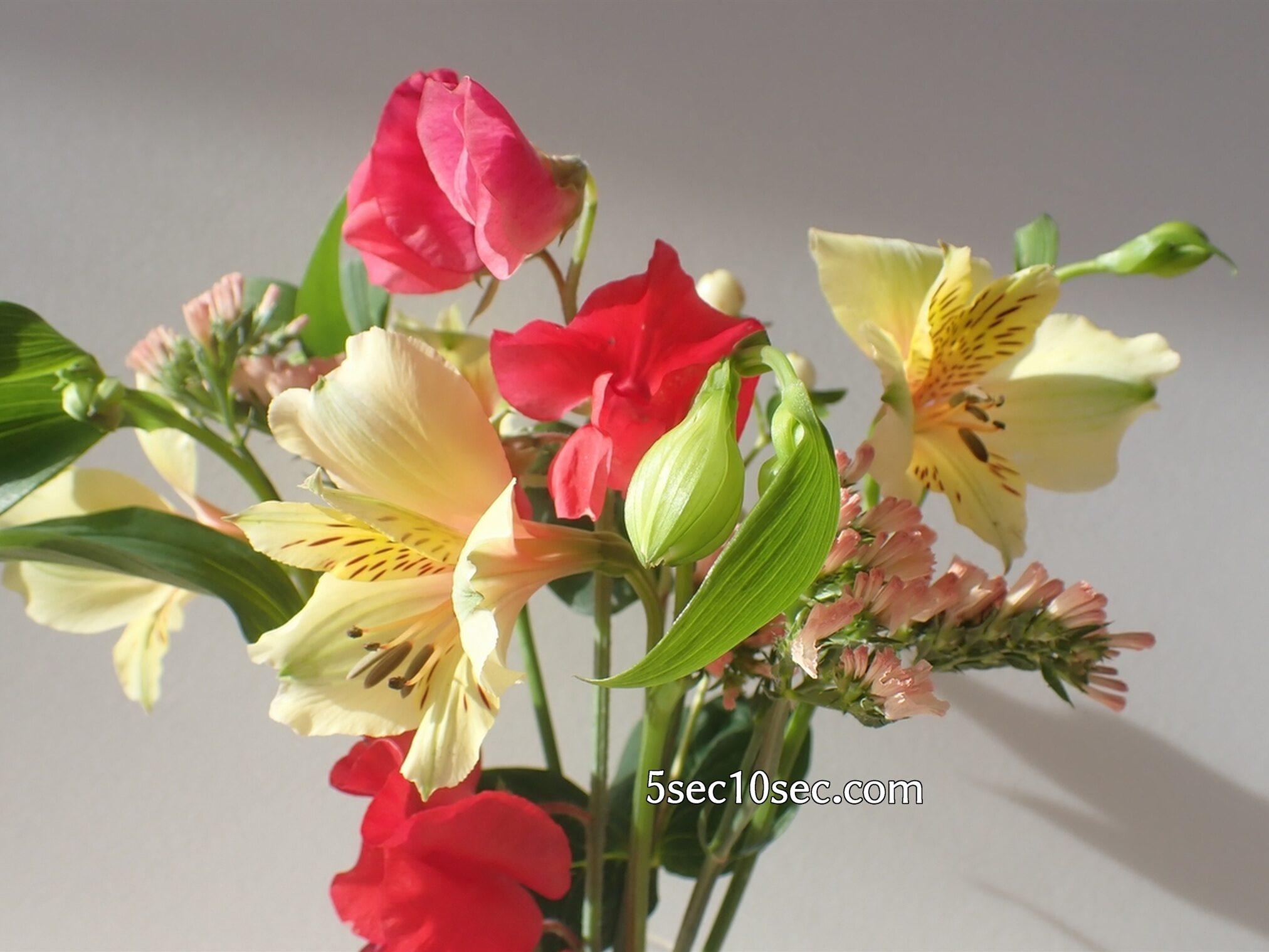 Bloomee LIFE(ブルーミーライフ)レギュラープラン アルストロメリアはお花も良いけどつぼみもかわいい