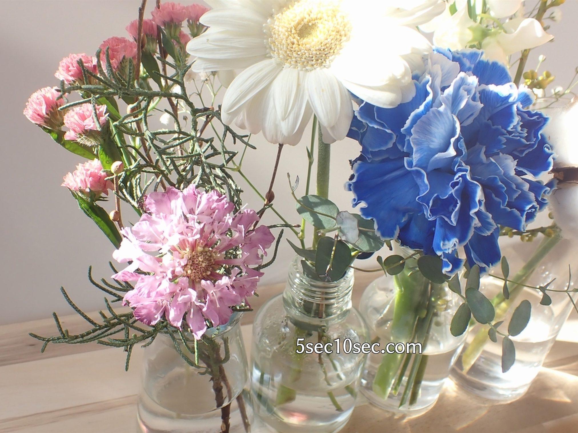 株式会社Crunch Style お花の定期便 Bloomee LIFE ブルーミーライフ 切り花のつぼみだったスカビオサが、お花の栄養剤に浸けているだけで開花しました