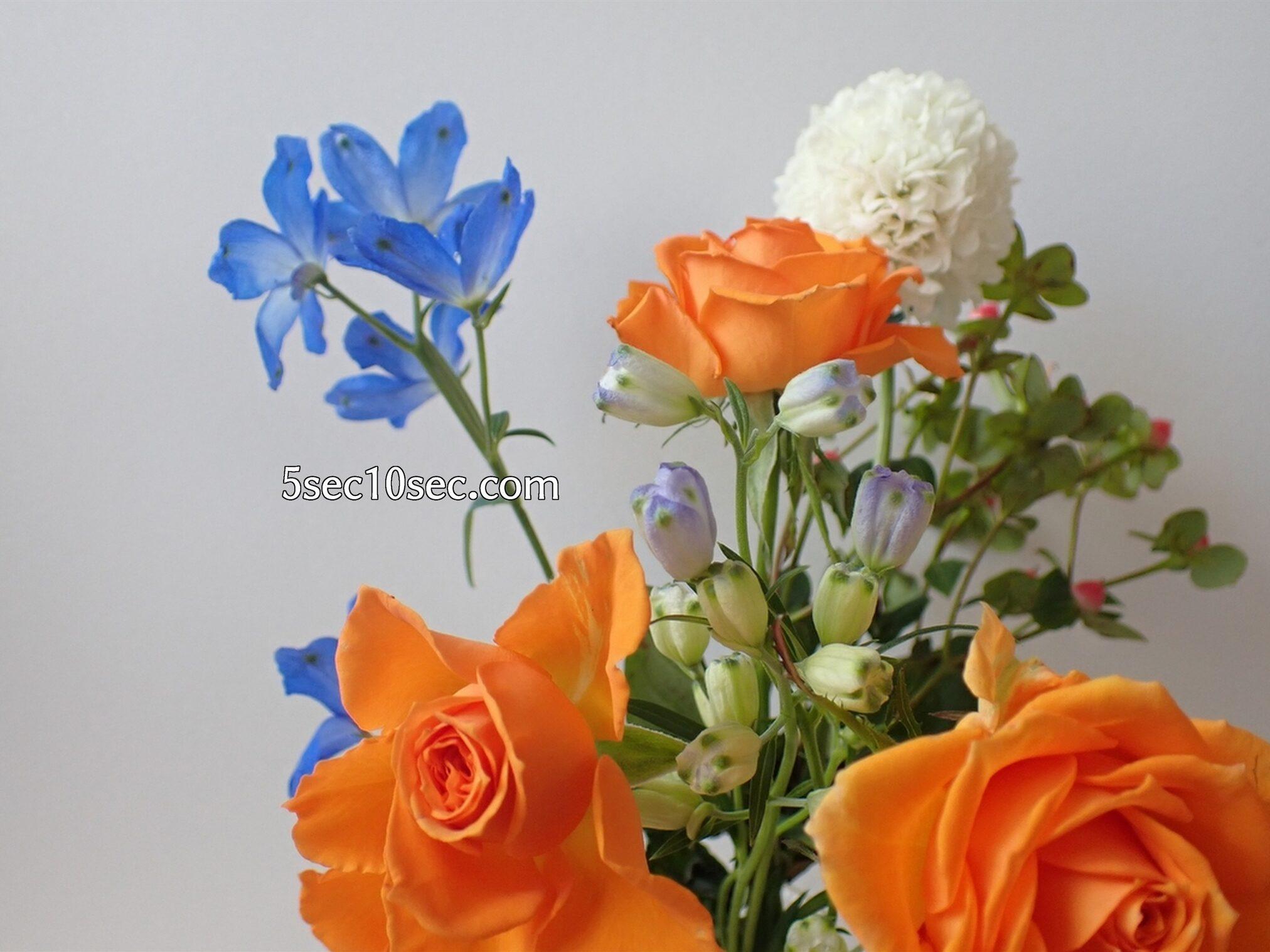 E(ブルーミーライフ)レギュラープラン 今週のお花 届いてから9日目の写真 スプレーデルフィニウムの変化が楽しい