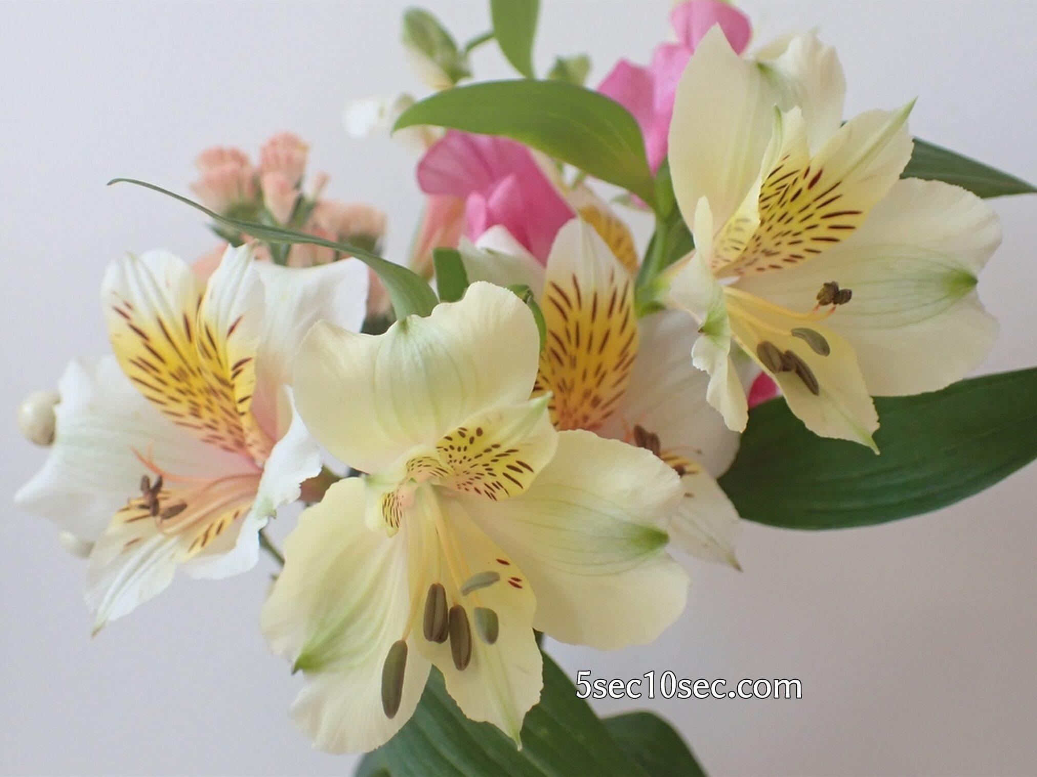 Bloomee LIFE(ブルーミーライフ)レギュラープラン 前回のお花のアルストロメリアのつぼみが開いて、いつの間にかお花が増えていた