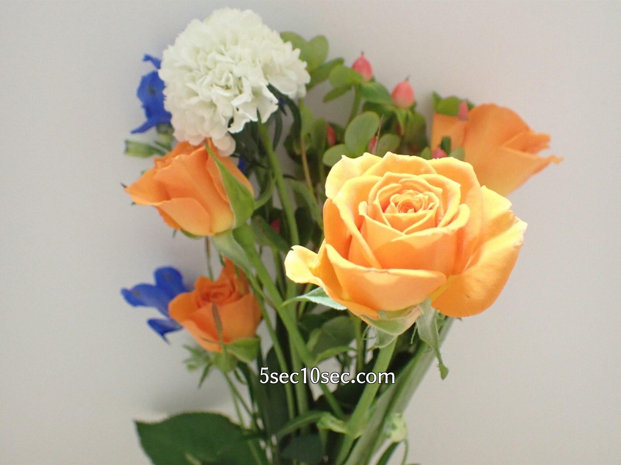 Bloomee LIFE(ブルーミーライフ)レギュラープラン 今週のお花 薔薇にも色んな種類があって、こちらはスプレーバラです