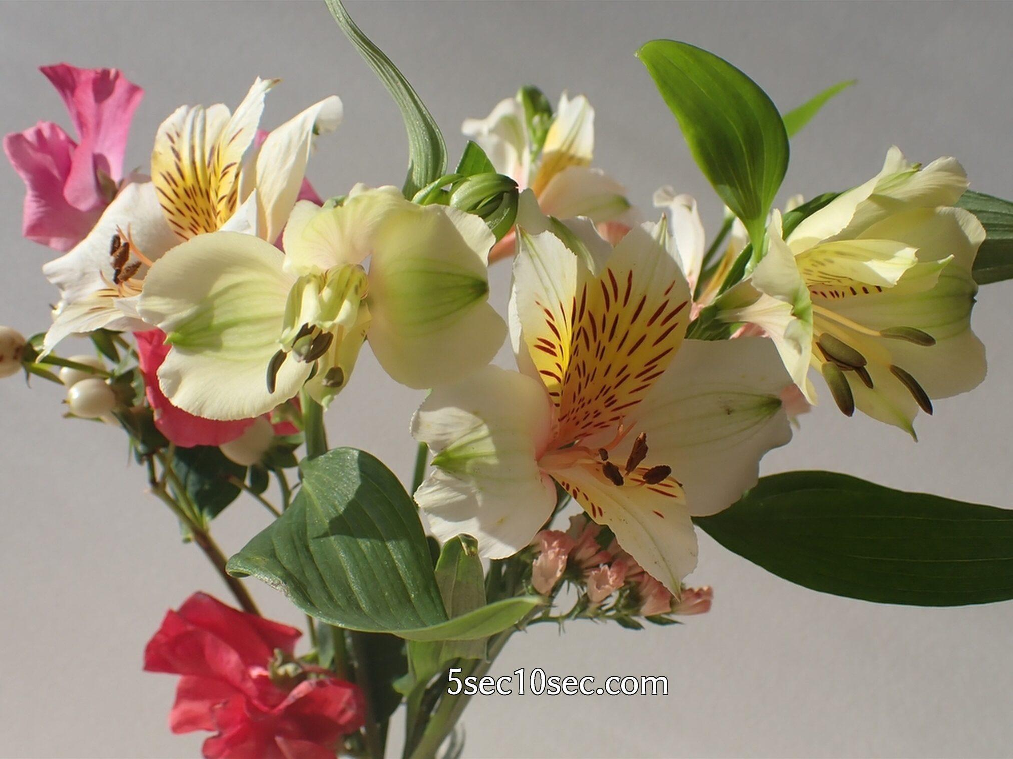 Bloomee LIFE(ブルーミーライフ)レギュラープラン 前回のお花のつぼみが開き始めた