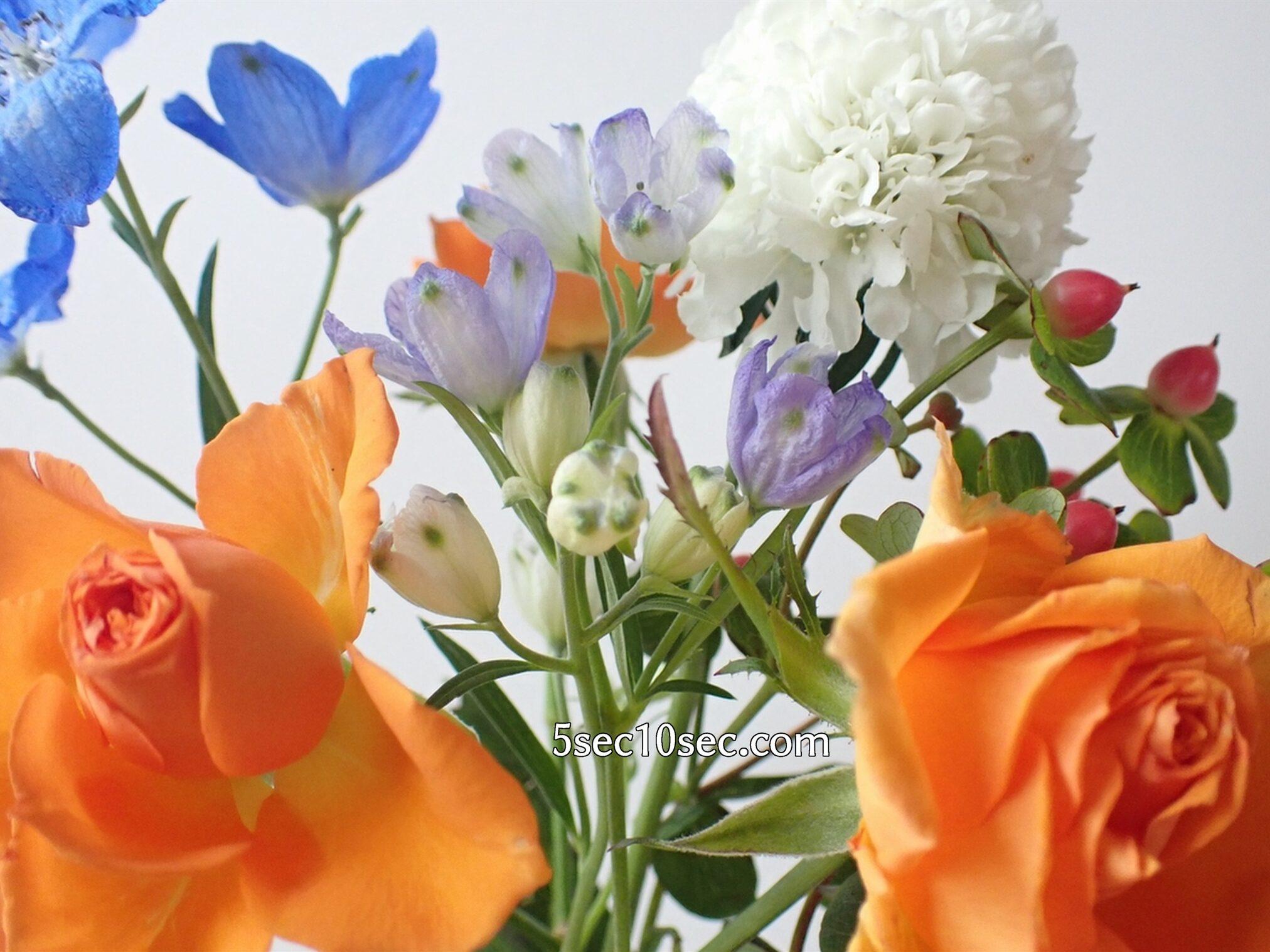 Bloomee LIFE(ブルーミーライフ)レギュラープラン 届いてから12日目に、スプレーデルフィニウムのお花のつぼみが開き始めました