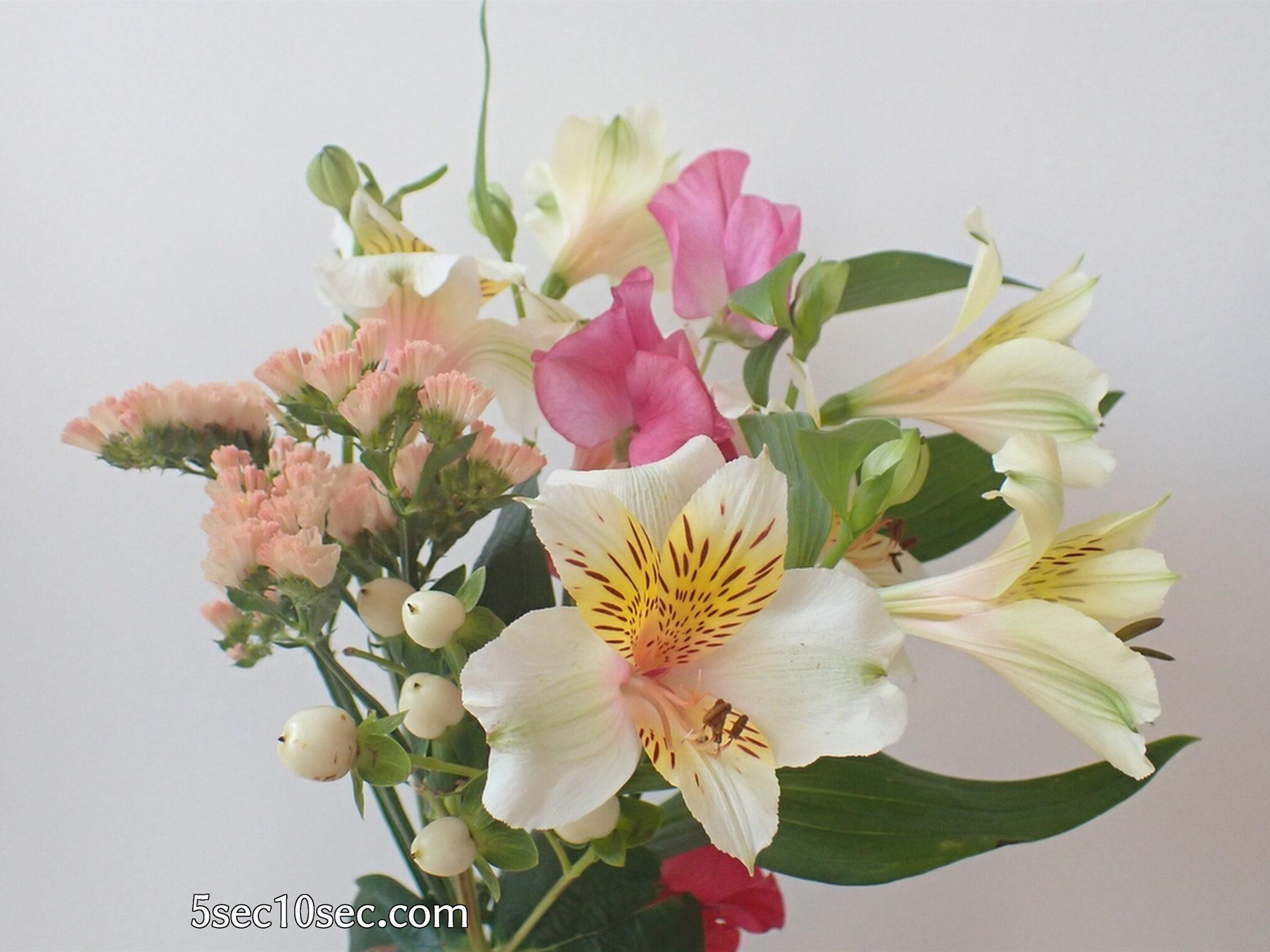 Bloomee LIFE(ブルーミーライフ)レギュラープラン 前回のお花のアルストロメリアのつぼみが開いた