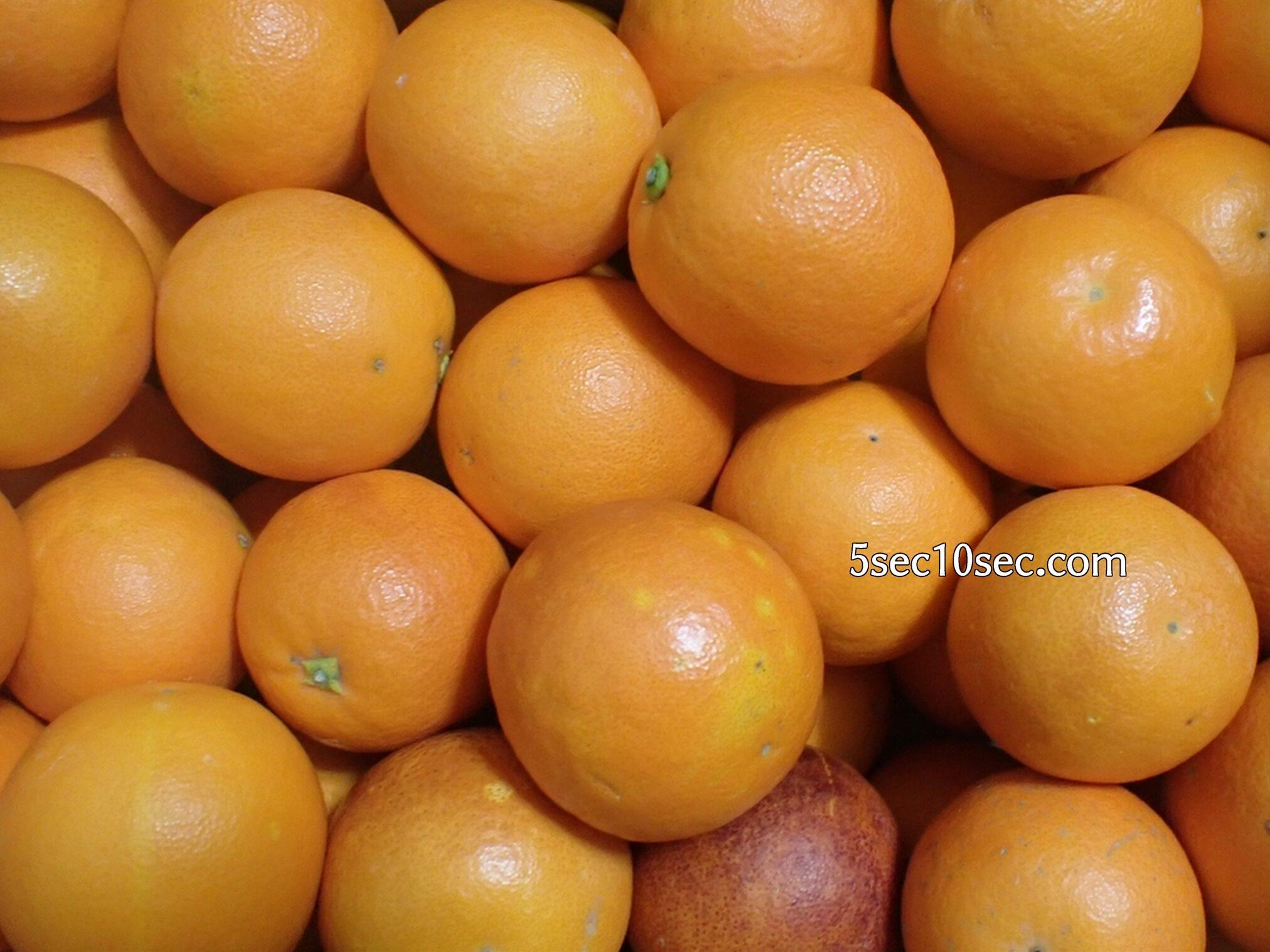 ブラッドオレンジ モロ種、タロッコ種 混合